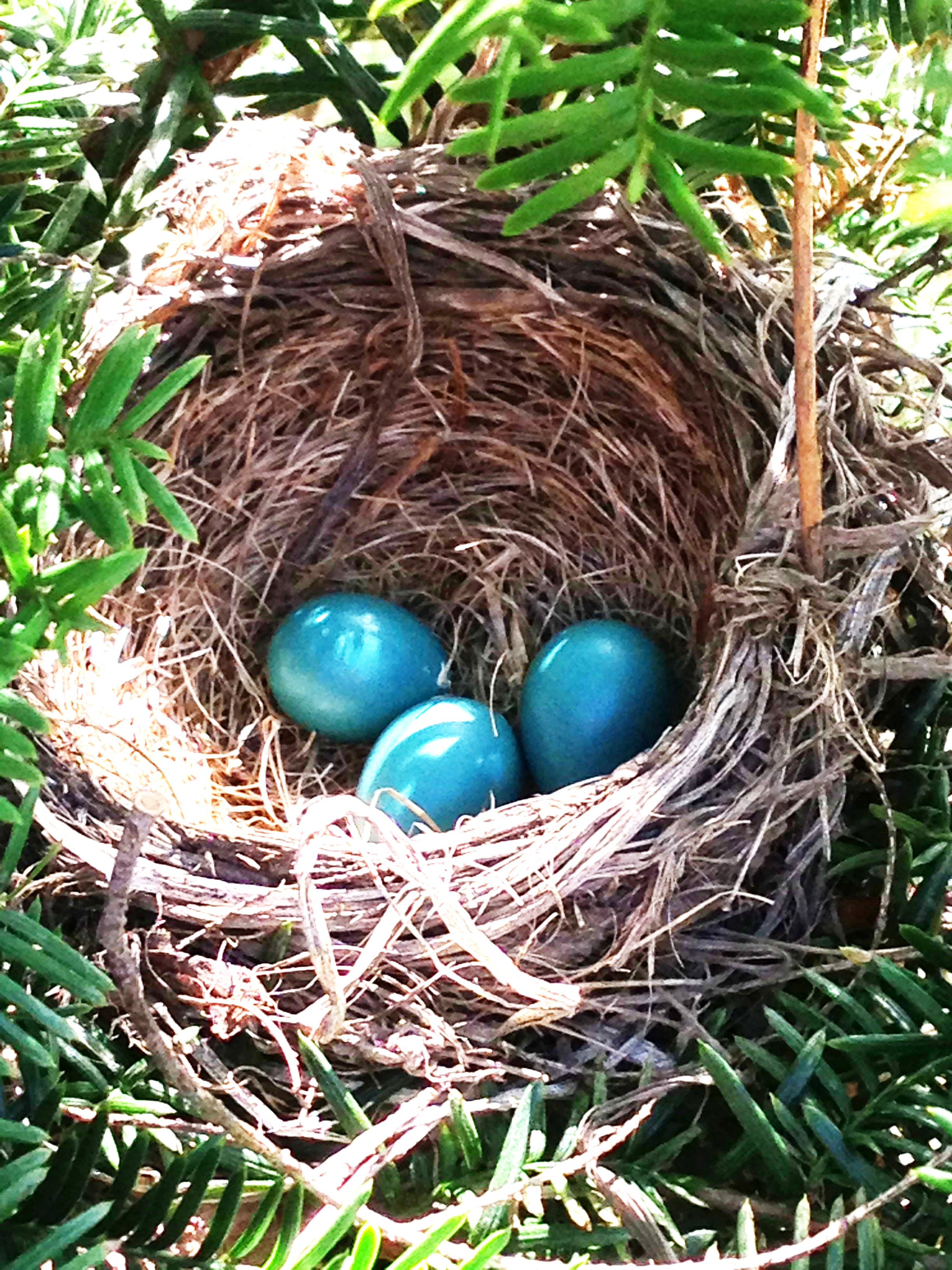 Library Monday: Birds, Nests, and Eggs. - Bird and Little Bird