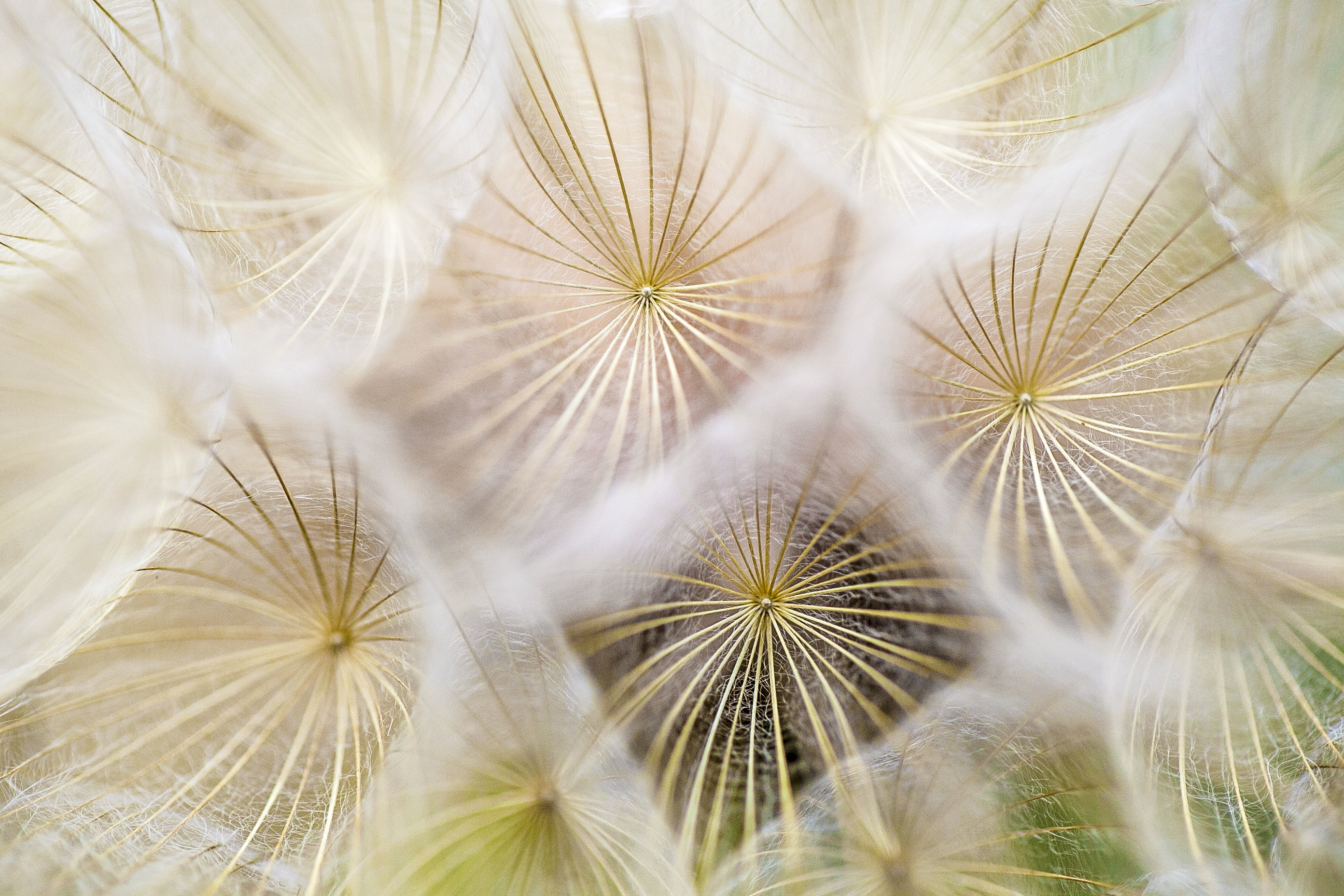 Net, Group, Plant, Silk, Smooth, HQ Photo