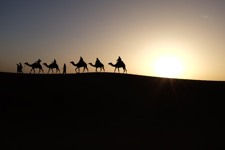 Never Ending Journey, Camels, Desert, Expedition, Journey, HQ Photo