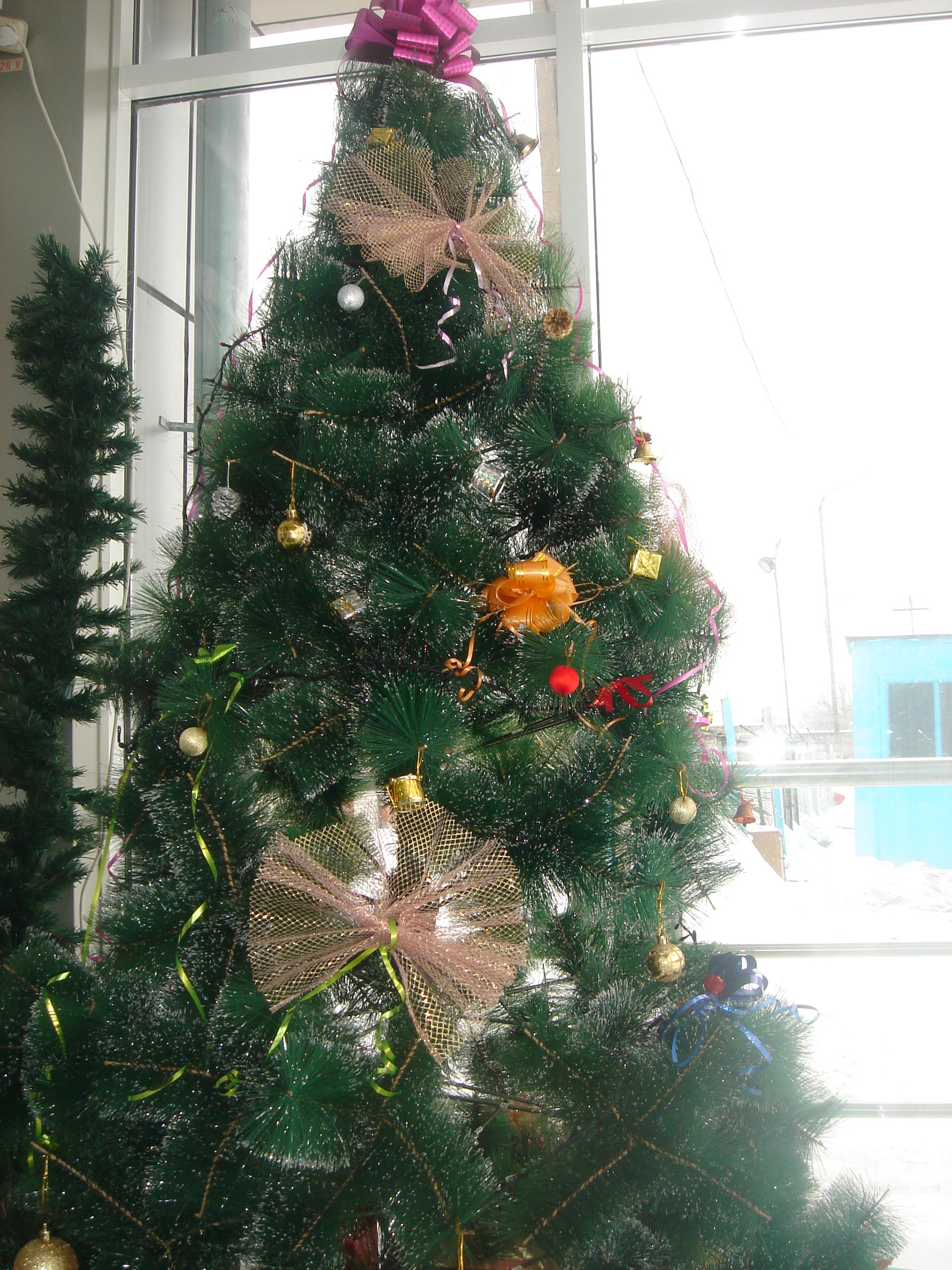 New years fir tree, Black, Shiny, Nature, Night, HQ Photo