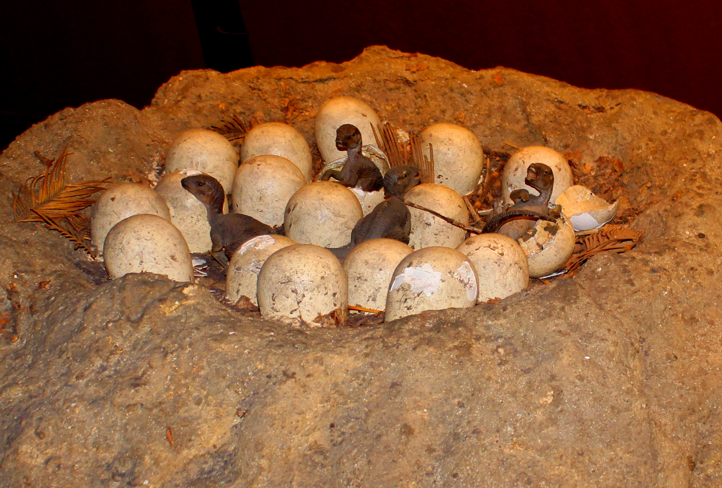 Newly hatched dinosaur eggs photo
