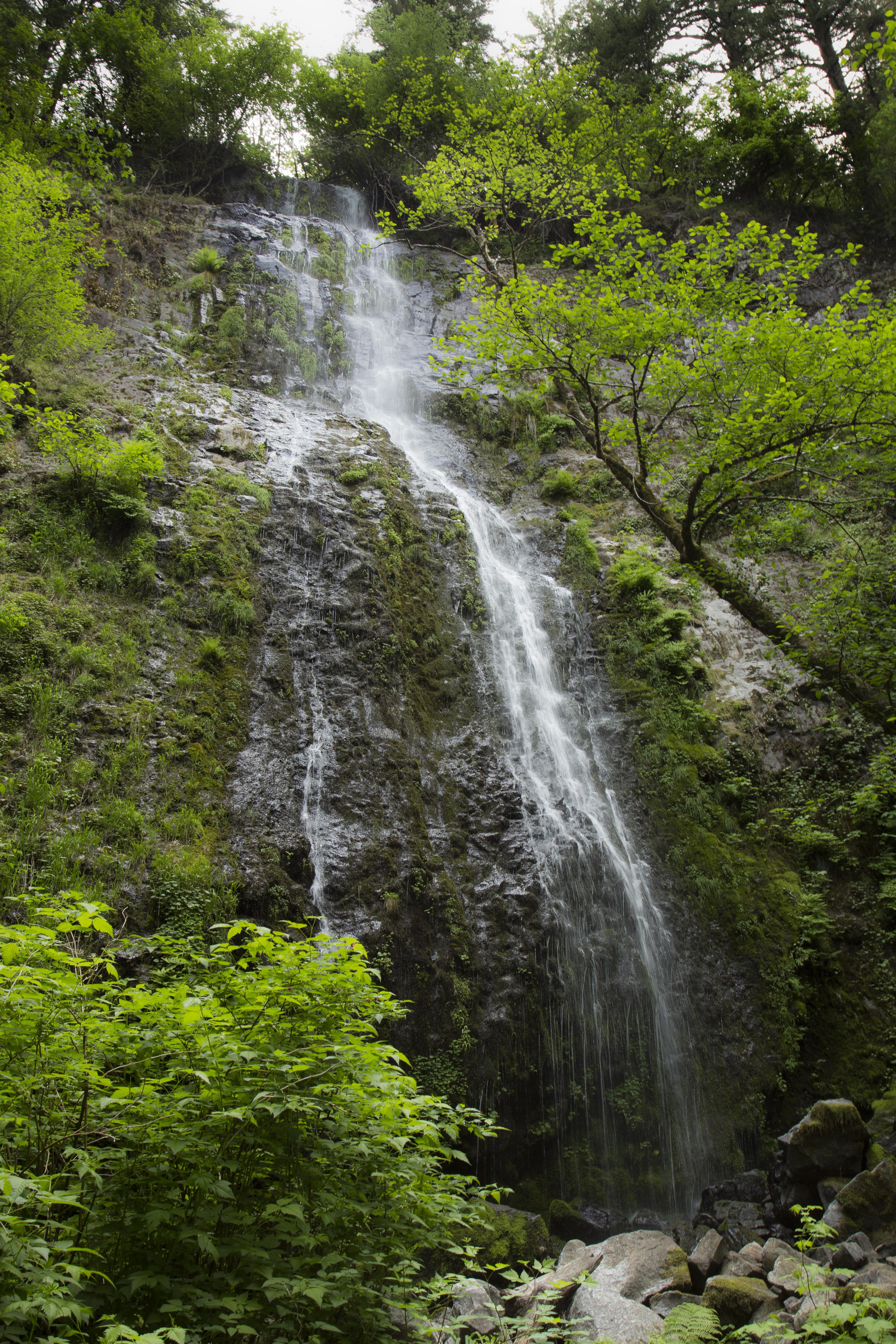 Niagara Falls, Oregon, Forest, Grass, Landscape, Niagara Falls, HQ Photo