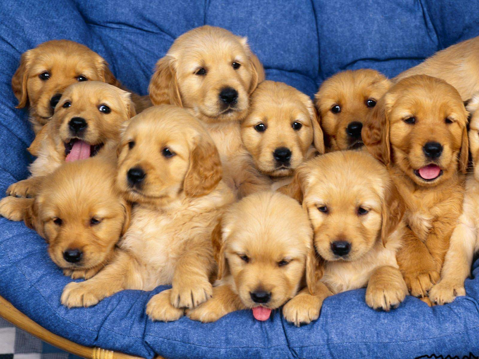 Nice puppy photo