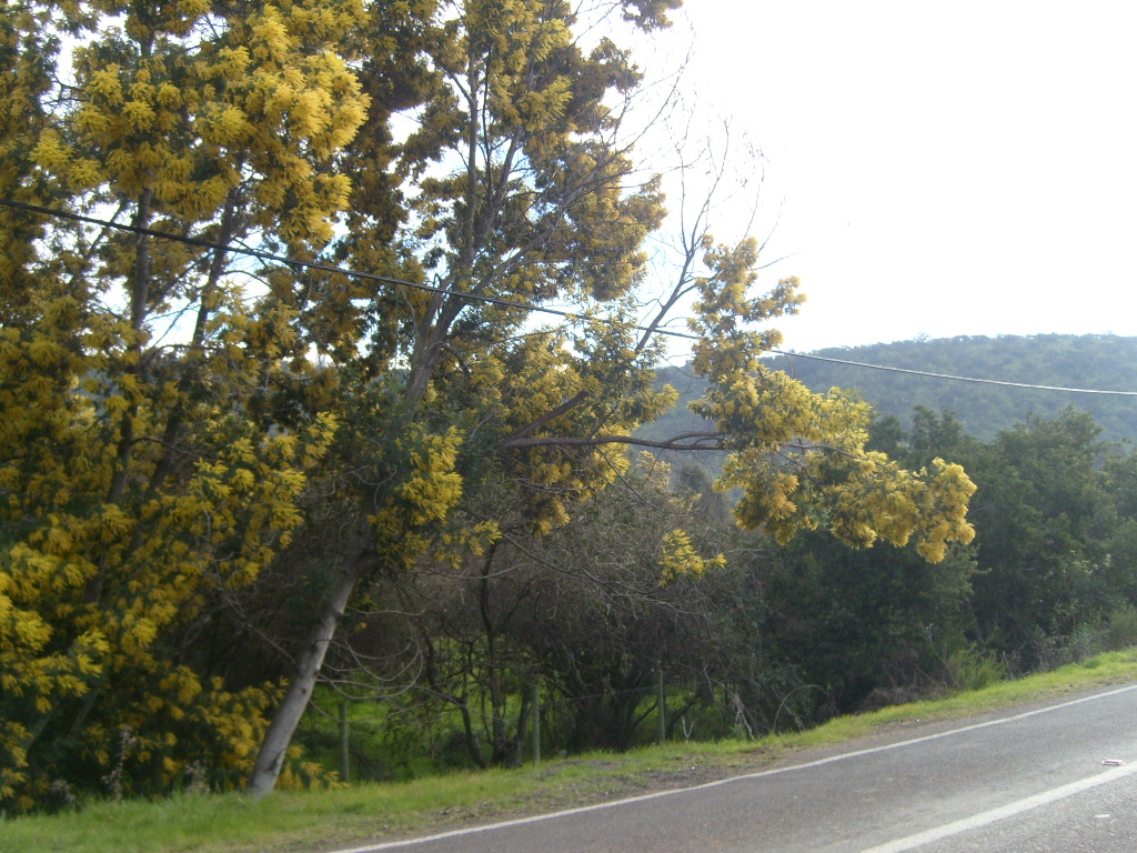 Nice trees in a country road photo