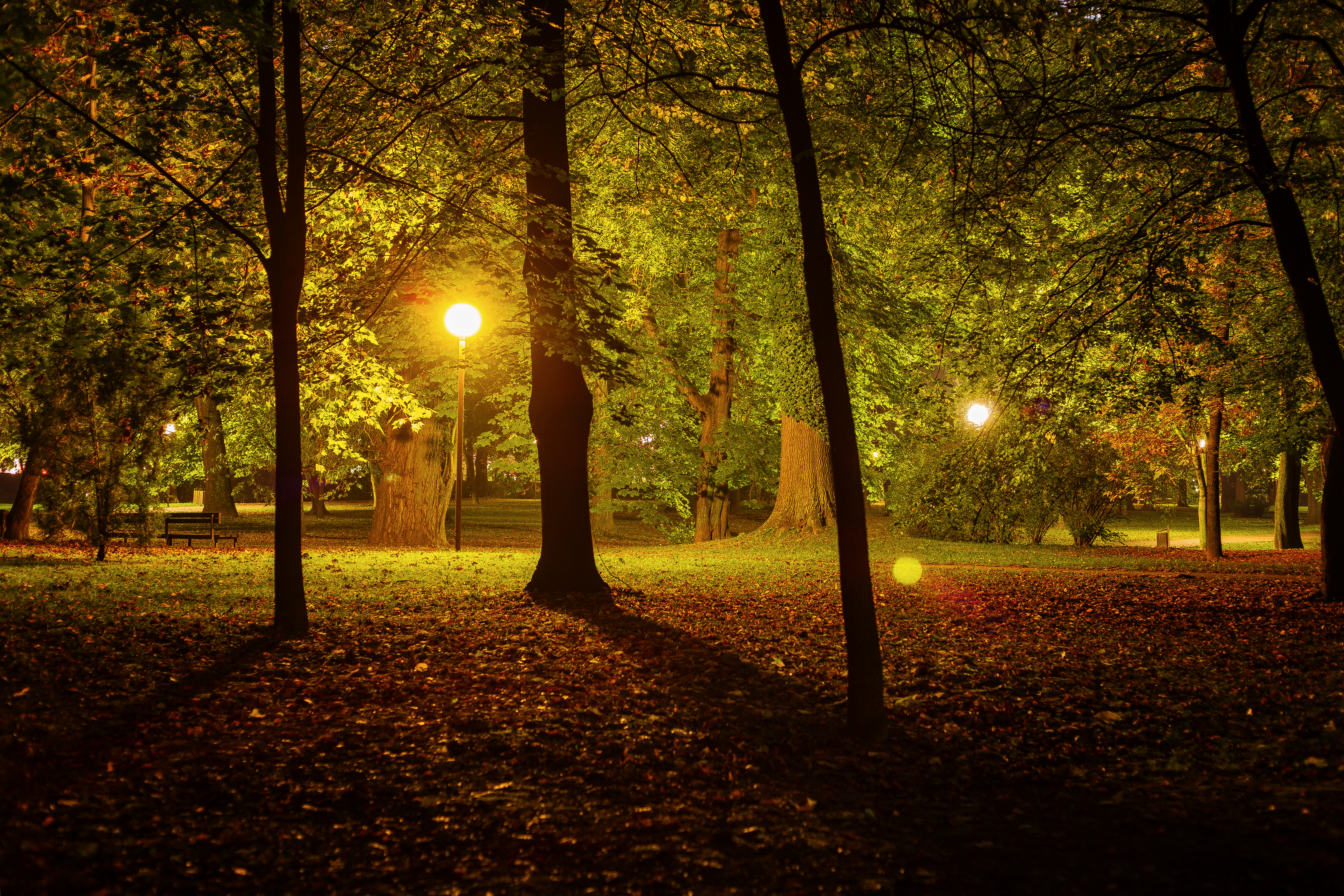 Night in the park photo