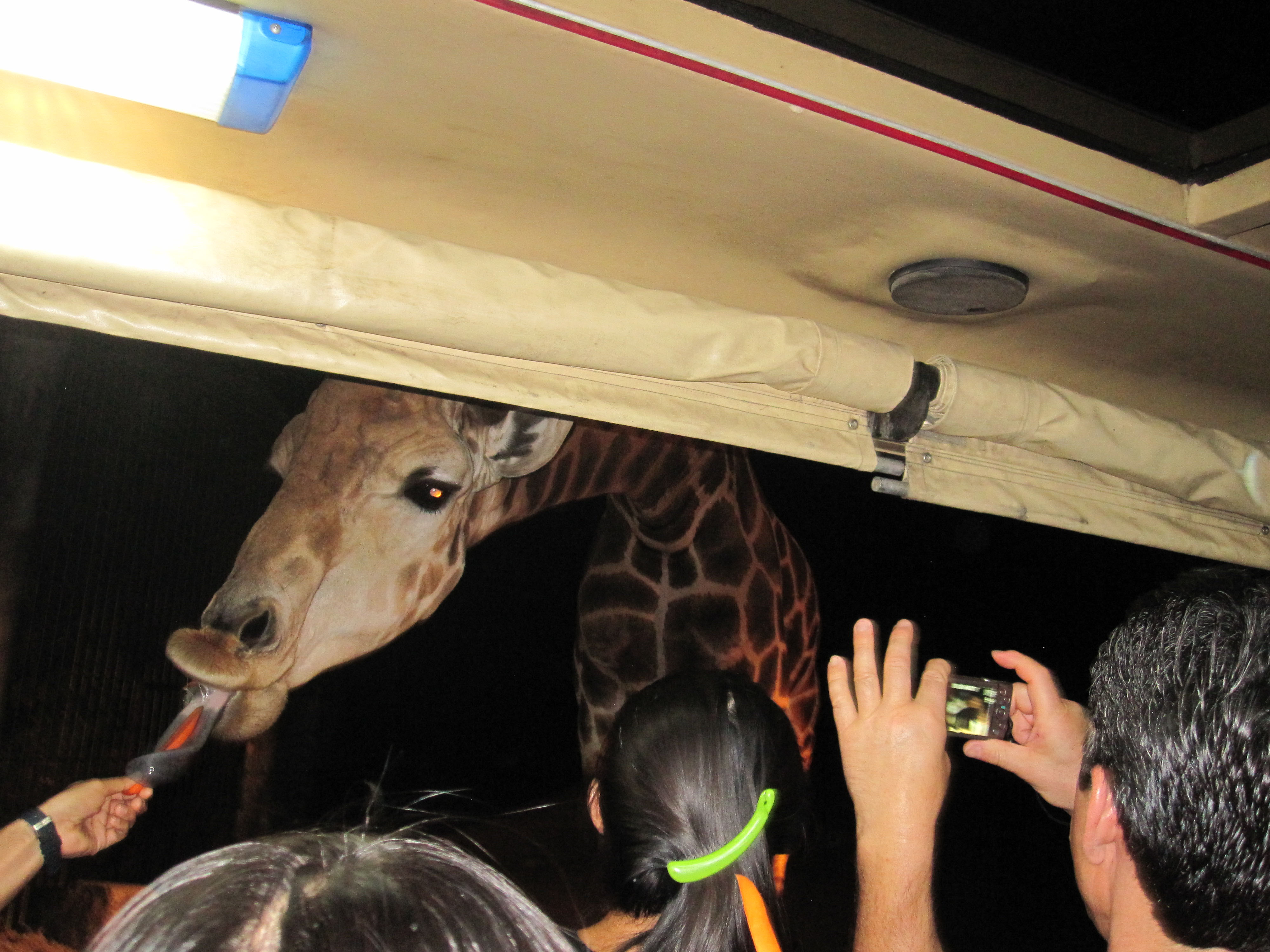 Night safari chiang mai photo