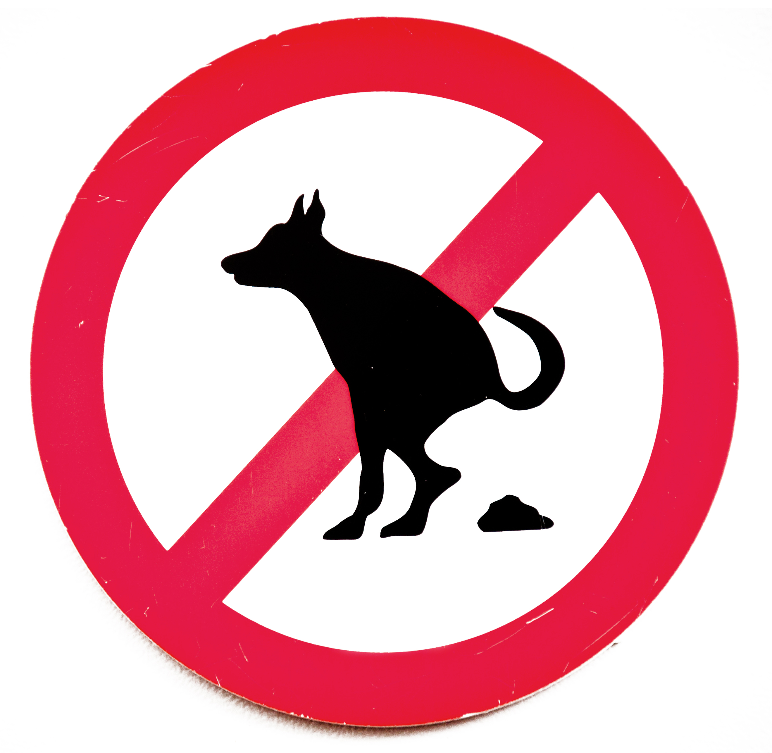 No dog poop sign photo