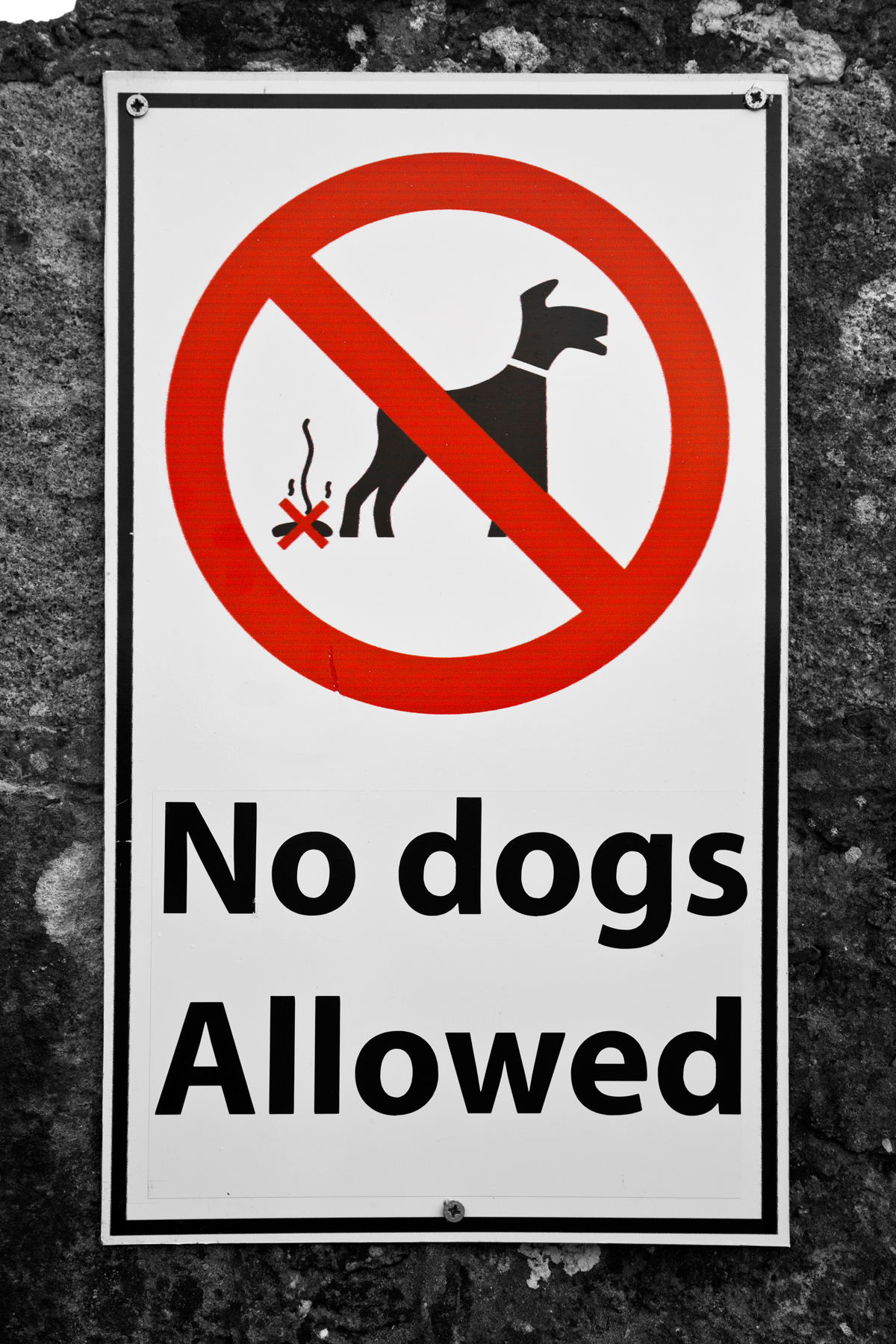 No Dogs Allowed Sign, Allowed, Poop, Object, Odor, HQ Photo