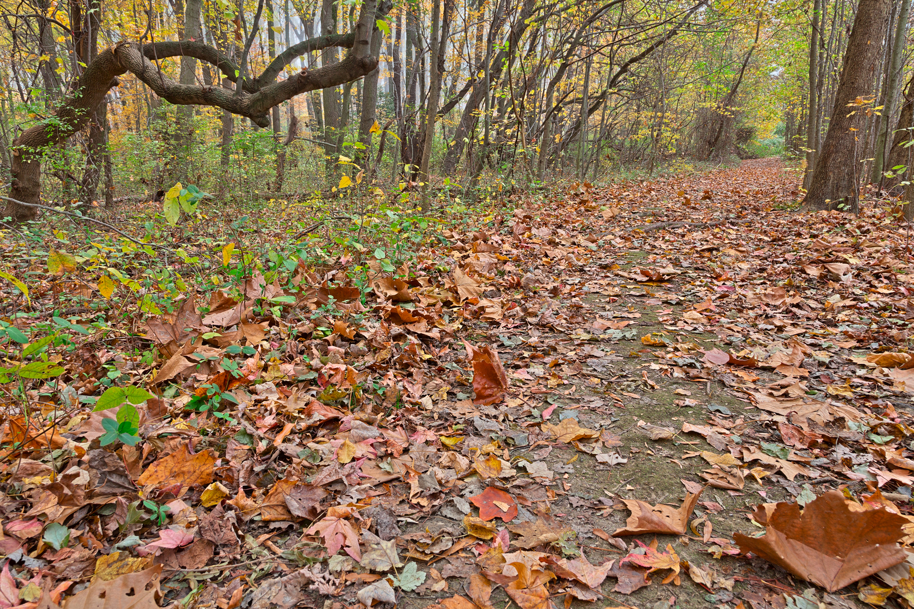 North point fall trail - hdr photo