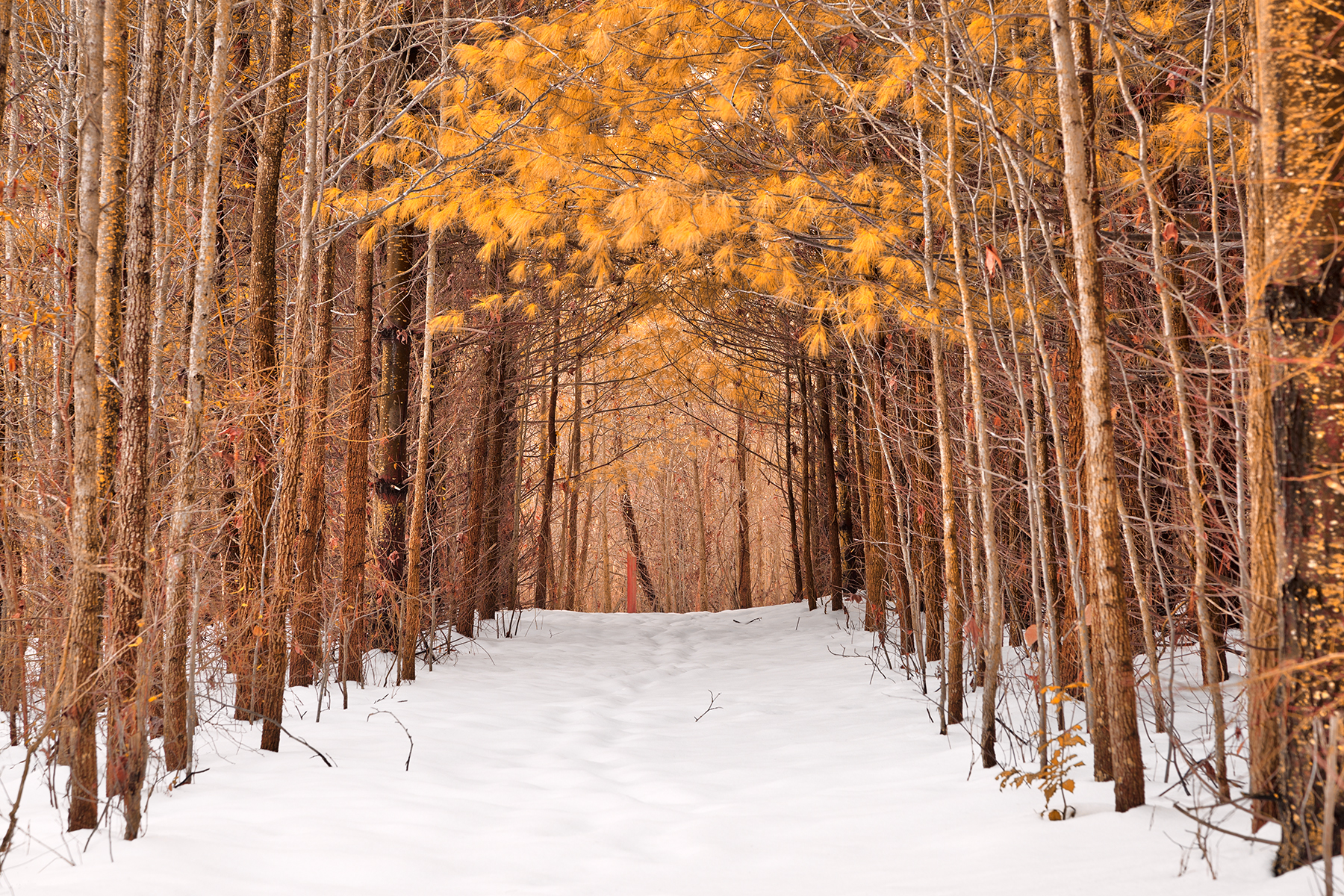 North Point Winter Pine Trail - Gold Fantasy HDR, Adventure, Point, Shadow, Shades, HQ Photo