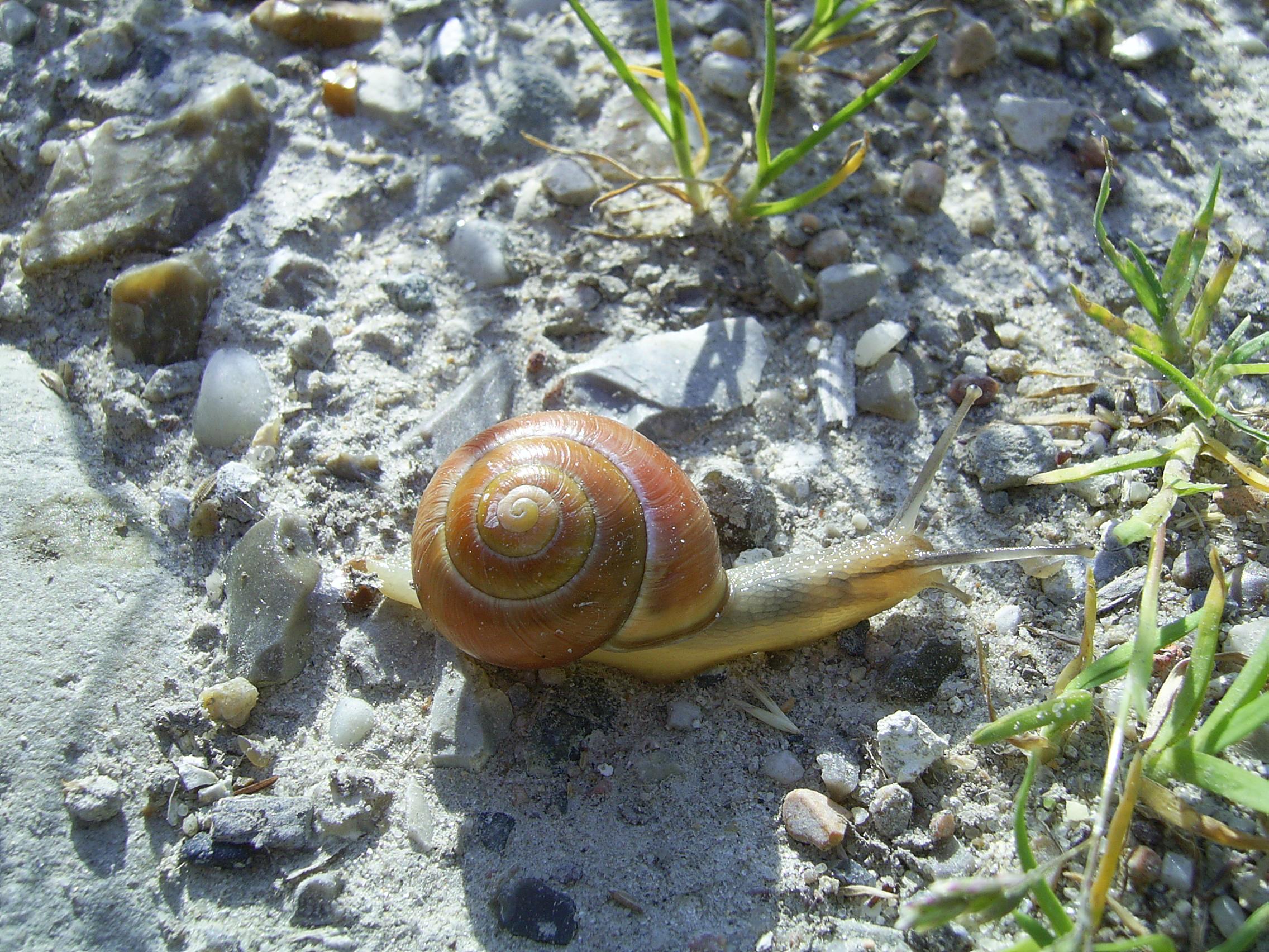 Norwegian snail, Animal, Bspo06, Crawl, Insect, HQ Photo