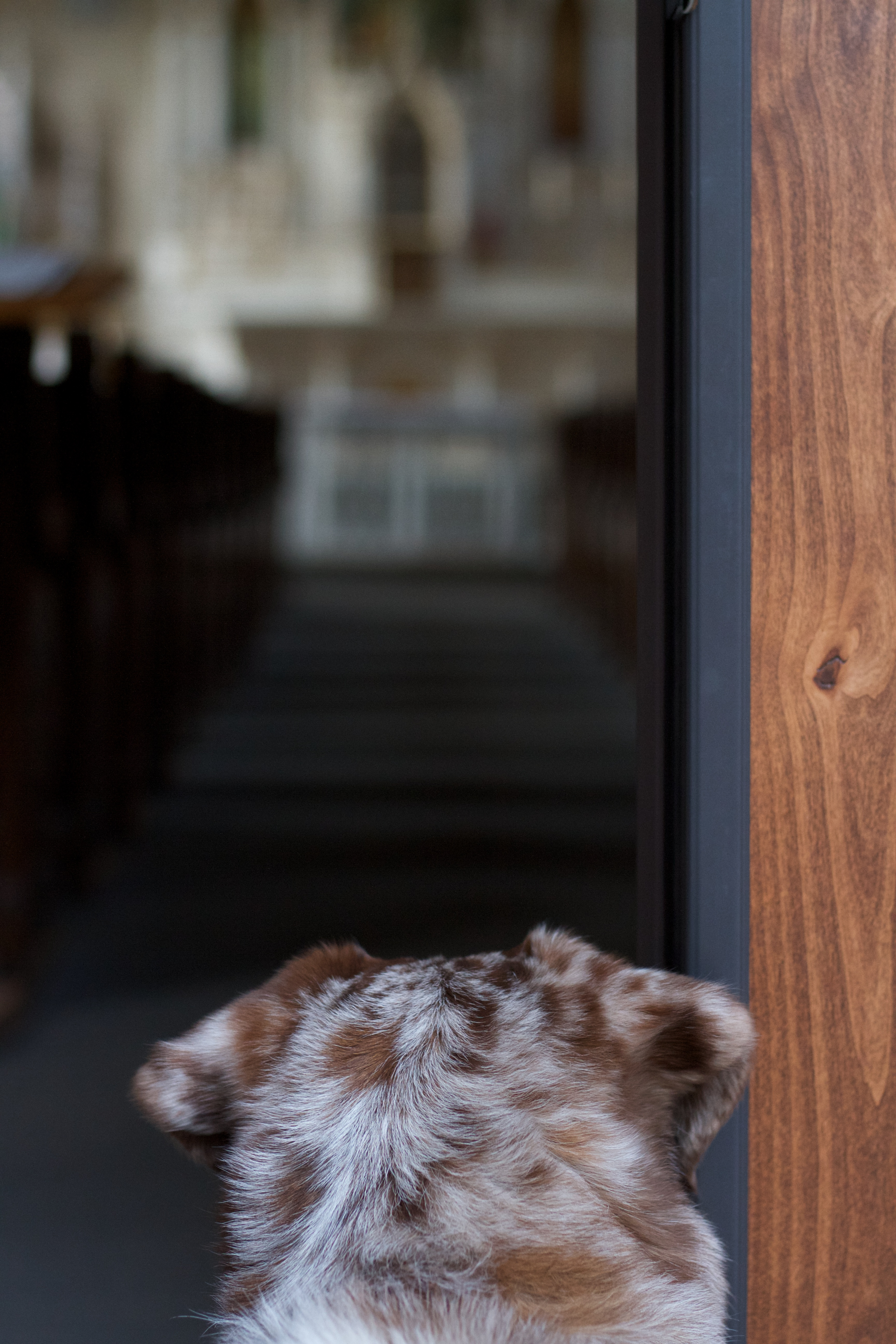 Not Interested in Church, Cat, Dog, Felix, Pet, HQ Photo