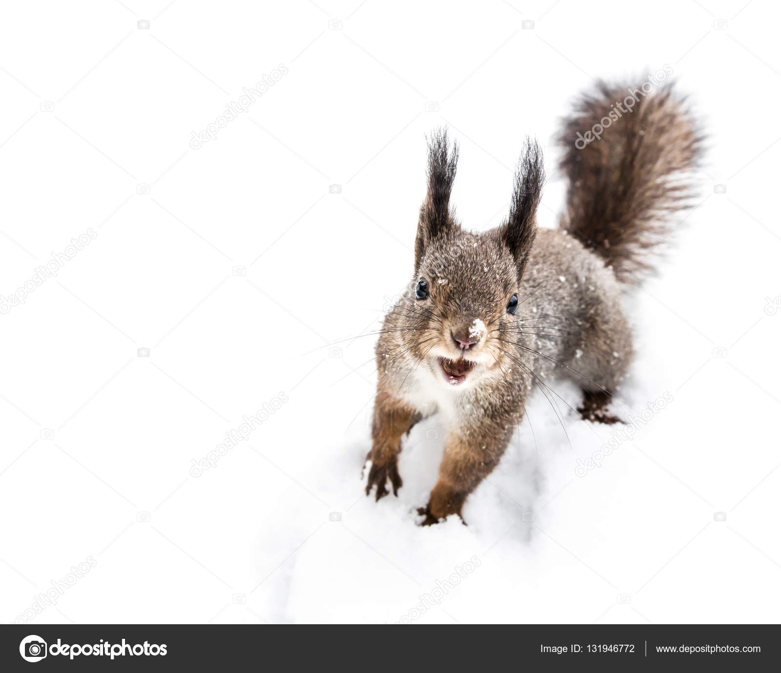 cute little squirrel standing in snow holding nut in mouth — Stock ...