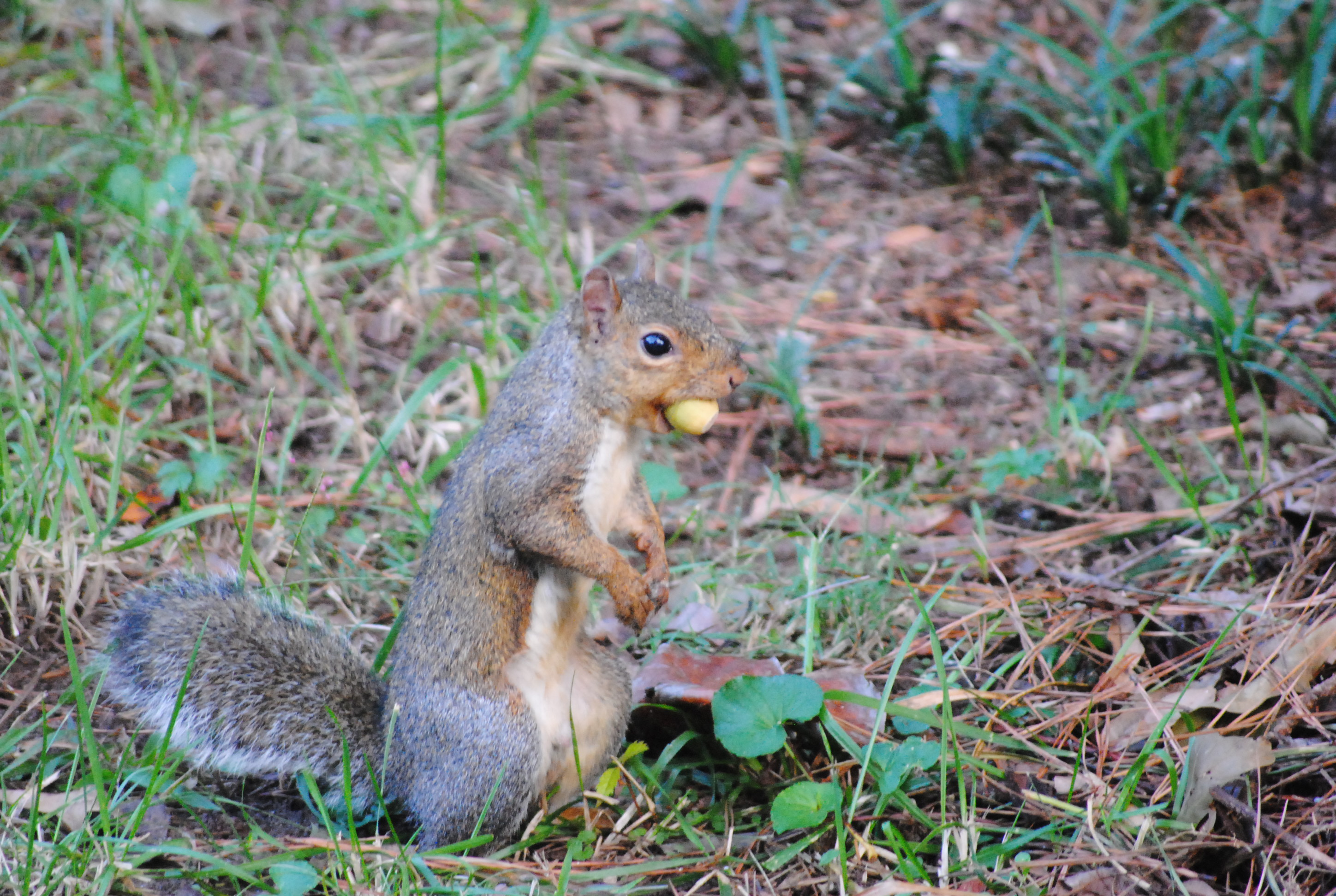 Nut in mouth, Animal, Food, Nature, Nut, HQ Photo