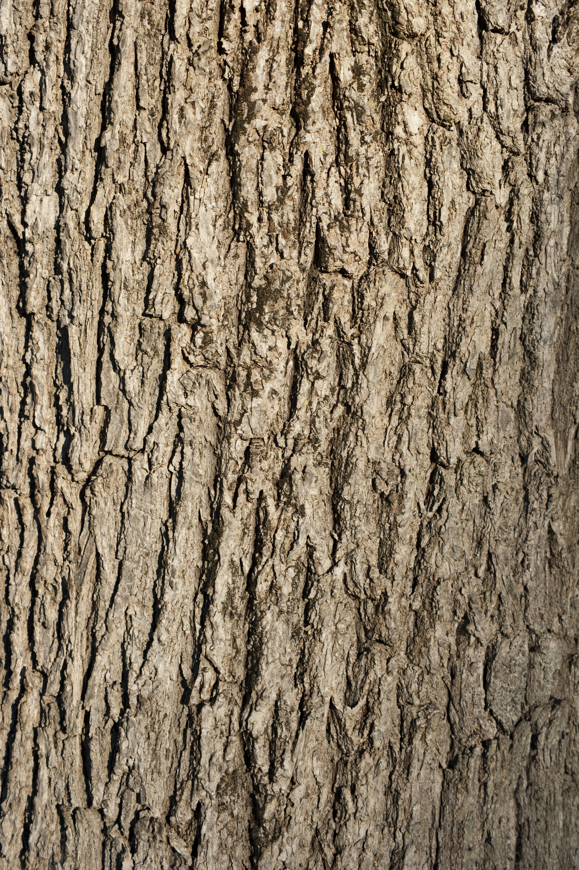Free image of tree bark background