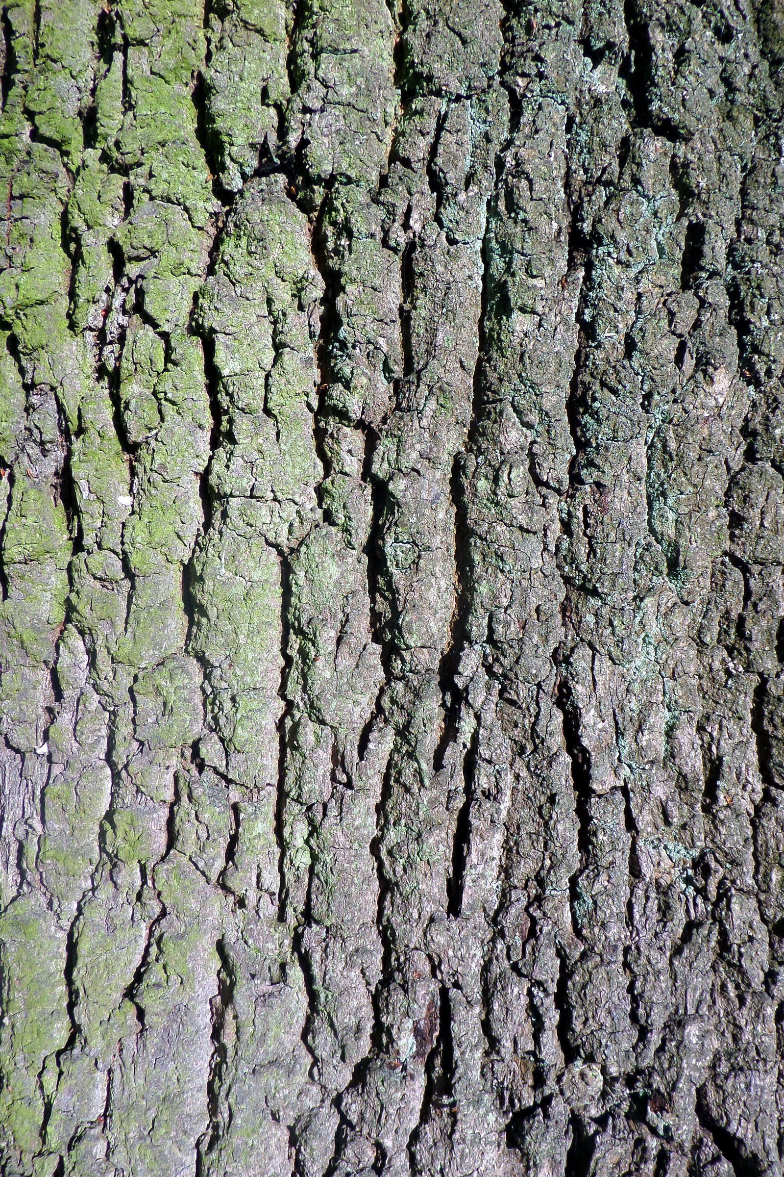 Oak bark texture, Bark, English, Oak, Texture, HQ Photo