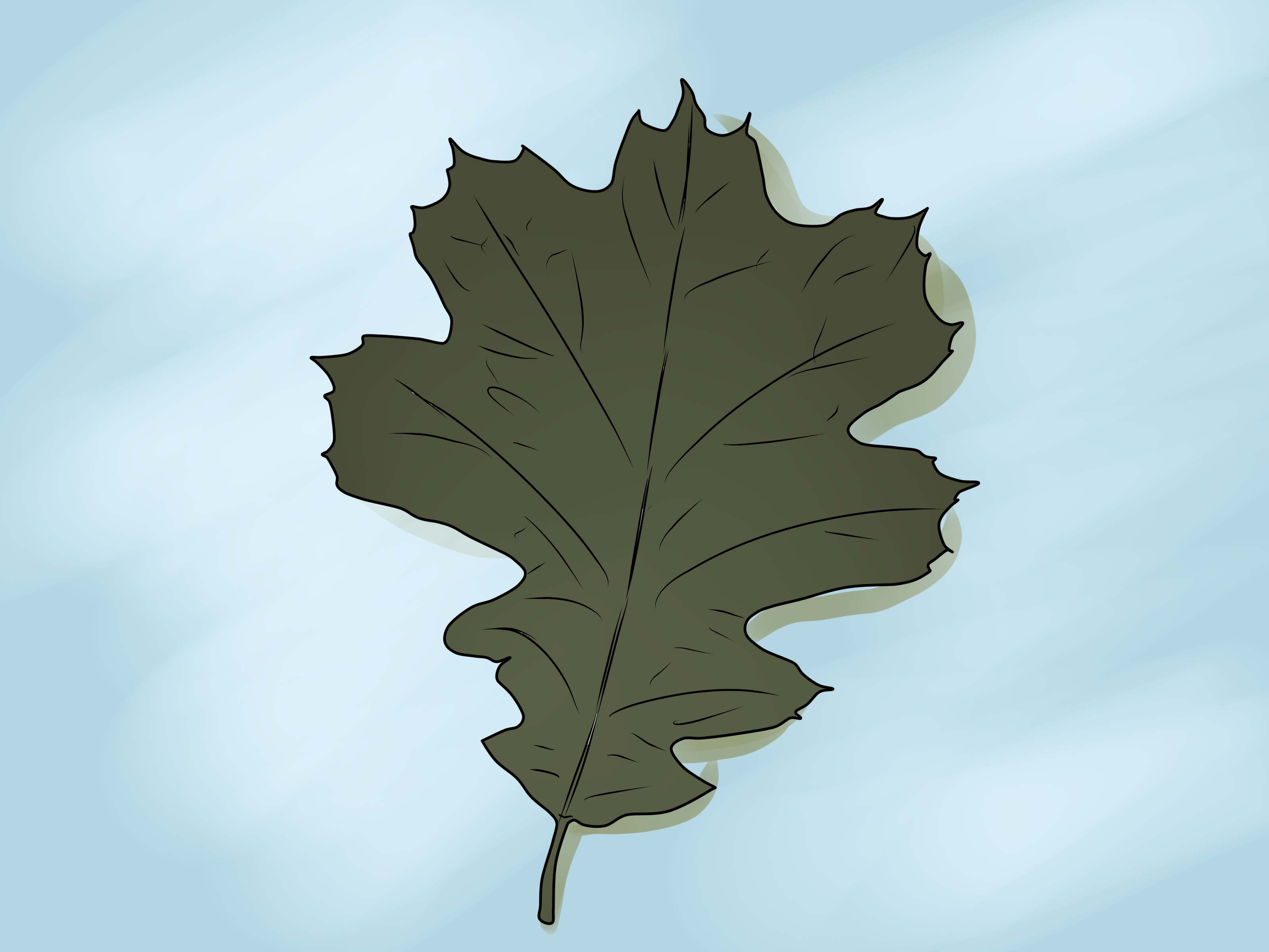 Oak leaf photo