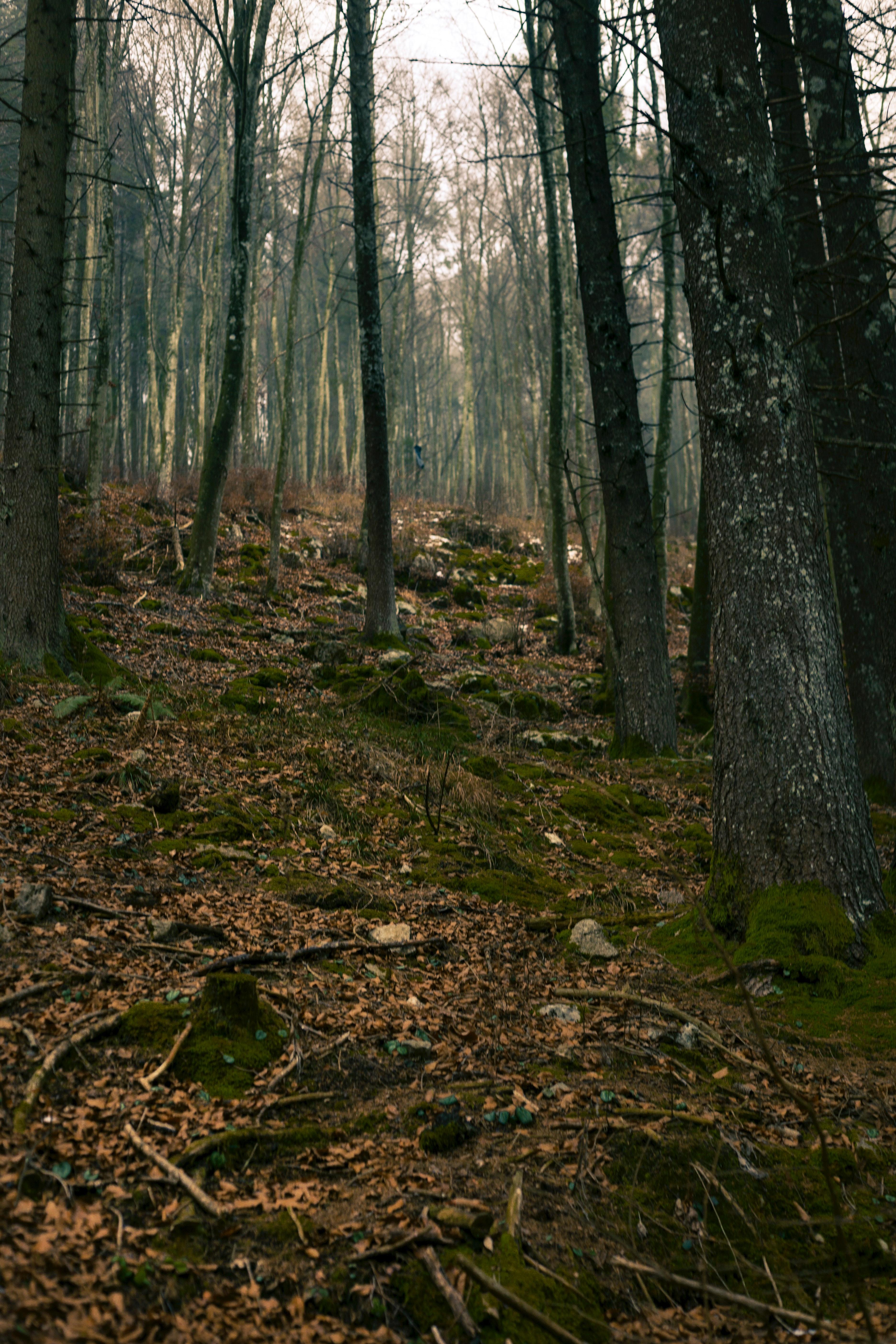 Oak tree lot photo