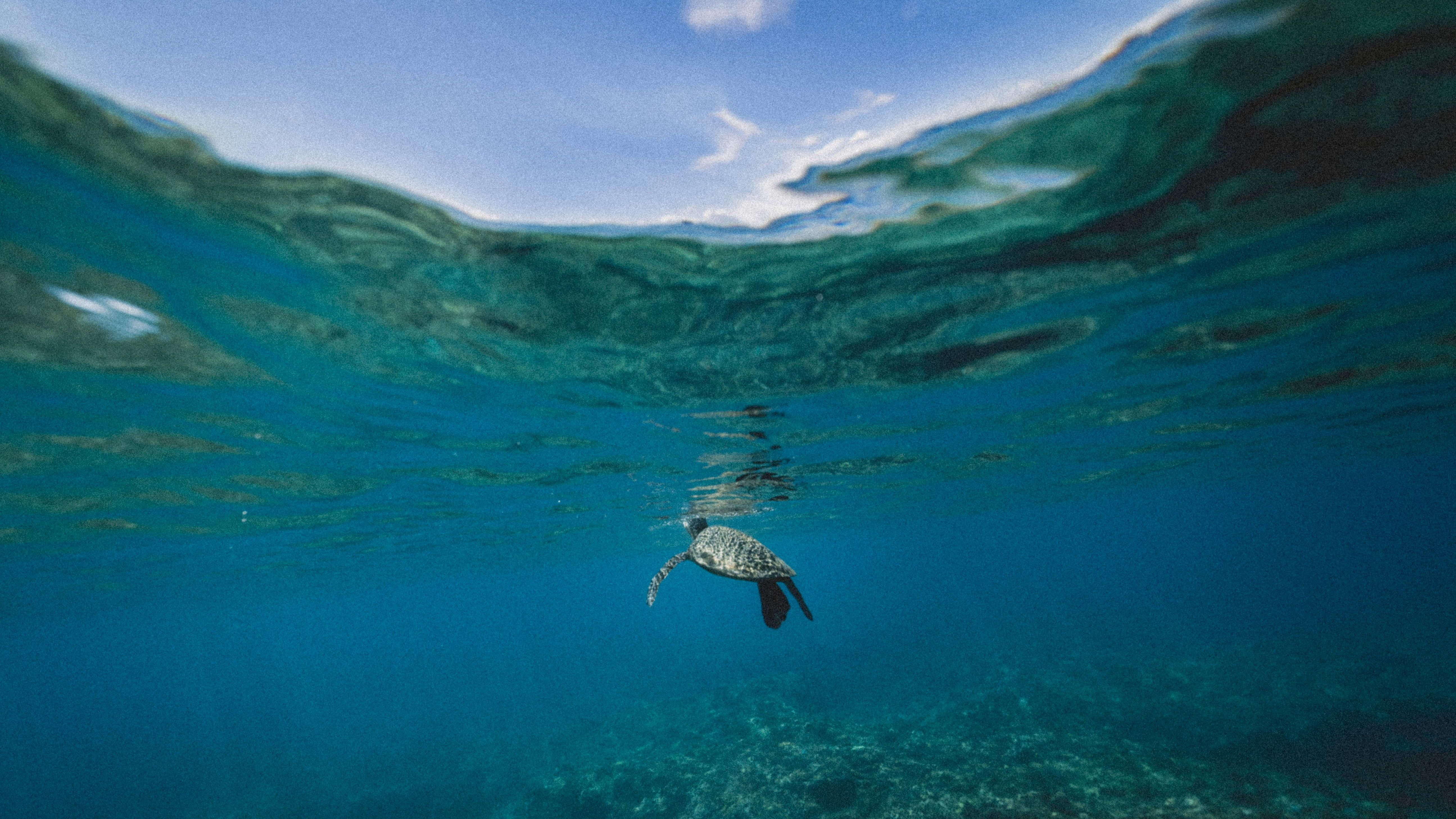 Ocean heat waves are increasing at an accelerating rate thanks to ...
