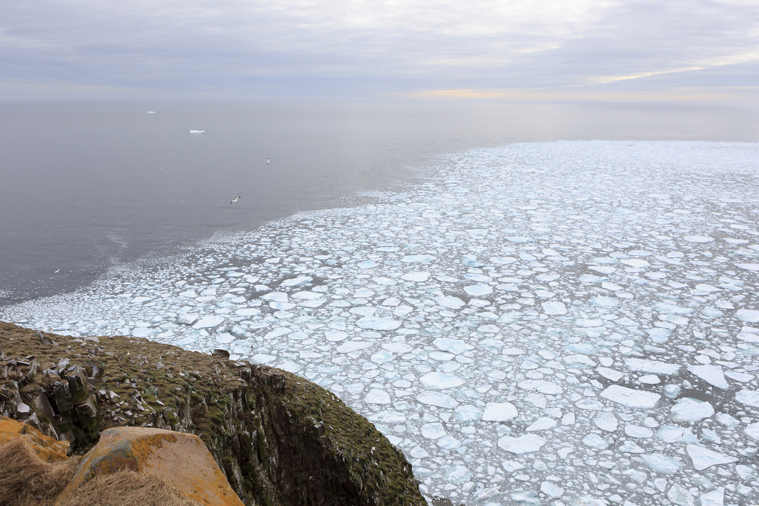Ocean ice at cape st. marys photo