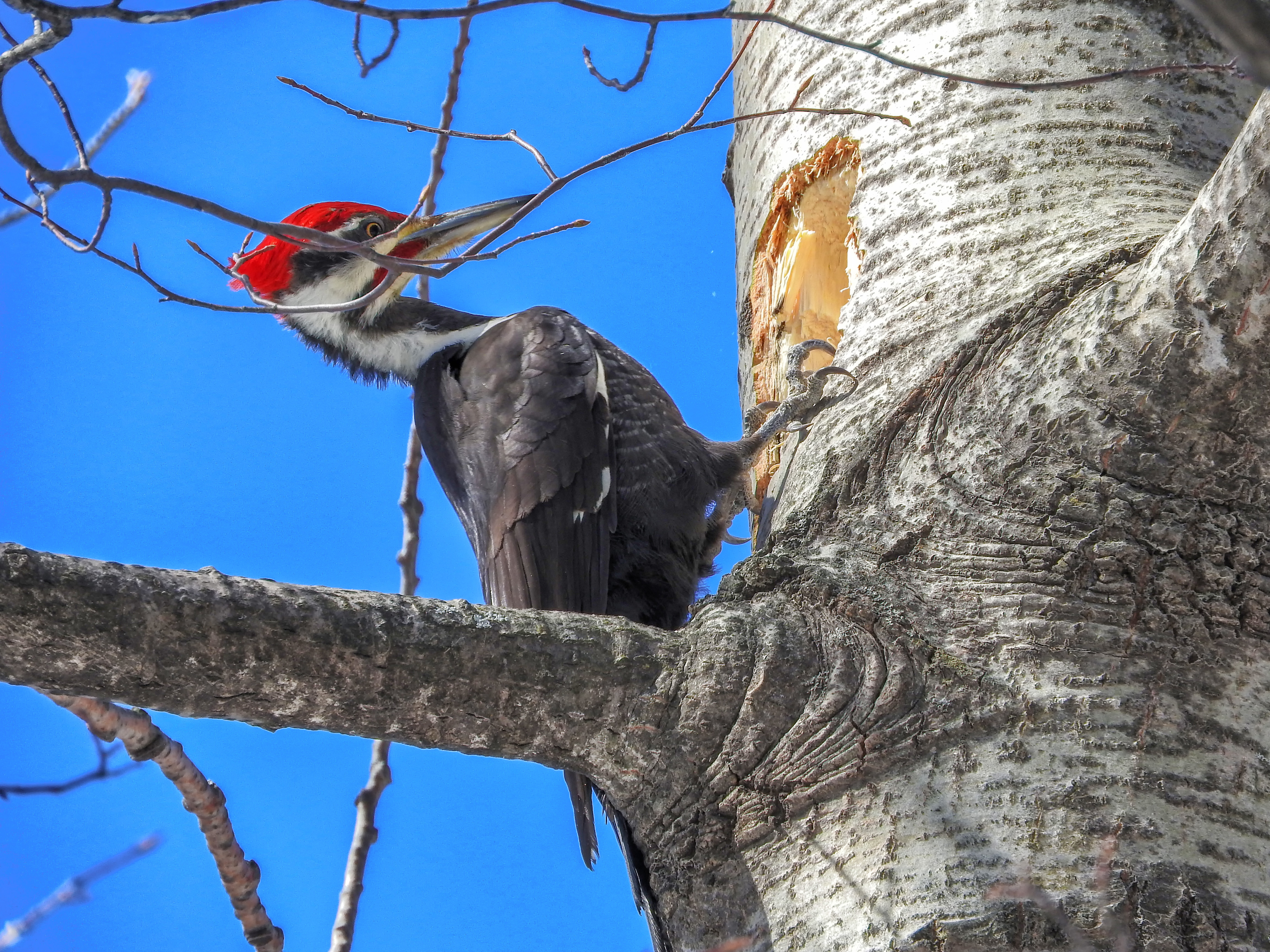Oiseau (grand pic) 026 photo