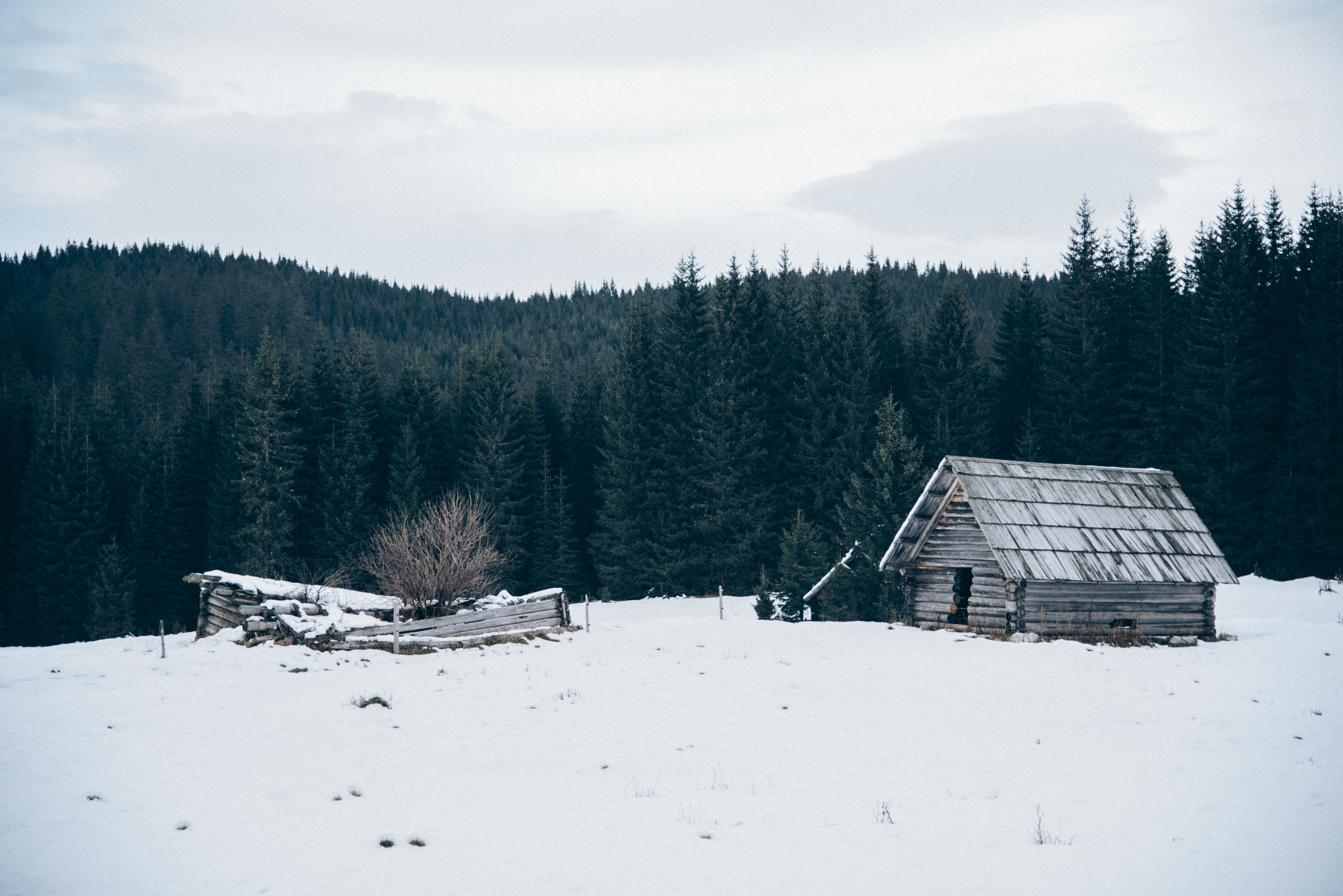 Old Cabin in Winter, Abandoned, Cabin, Forest, Green, HQ Photo