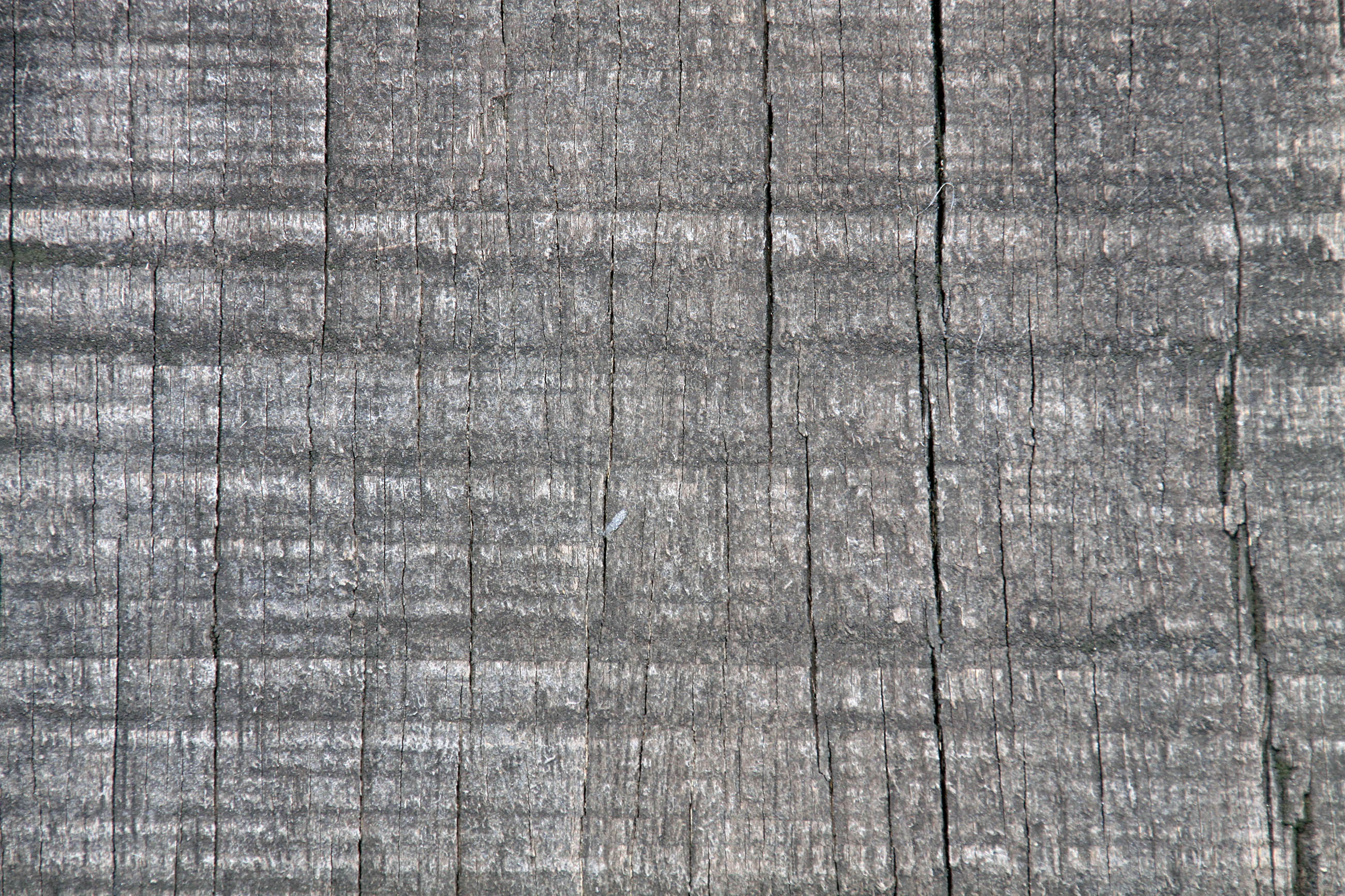 Old dry wood texture photo