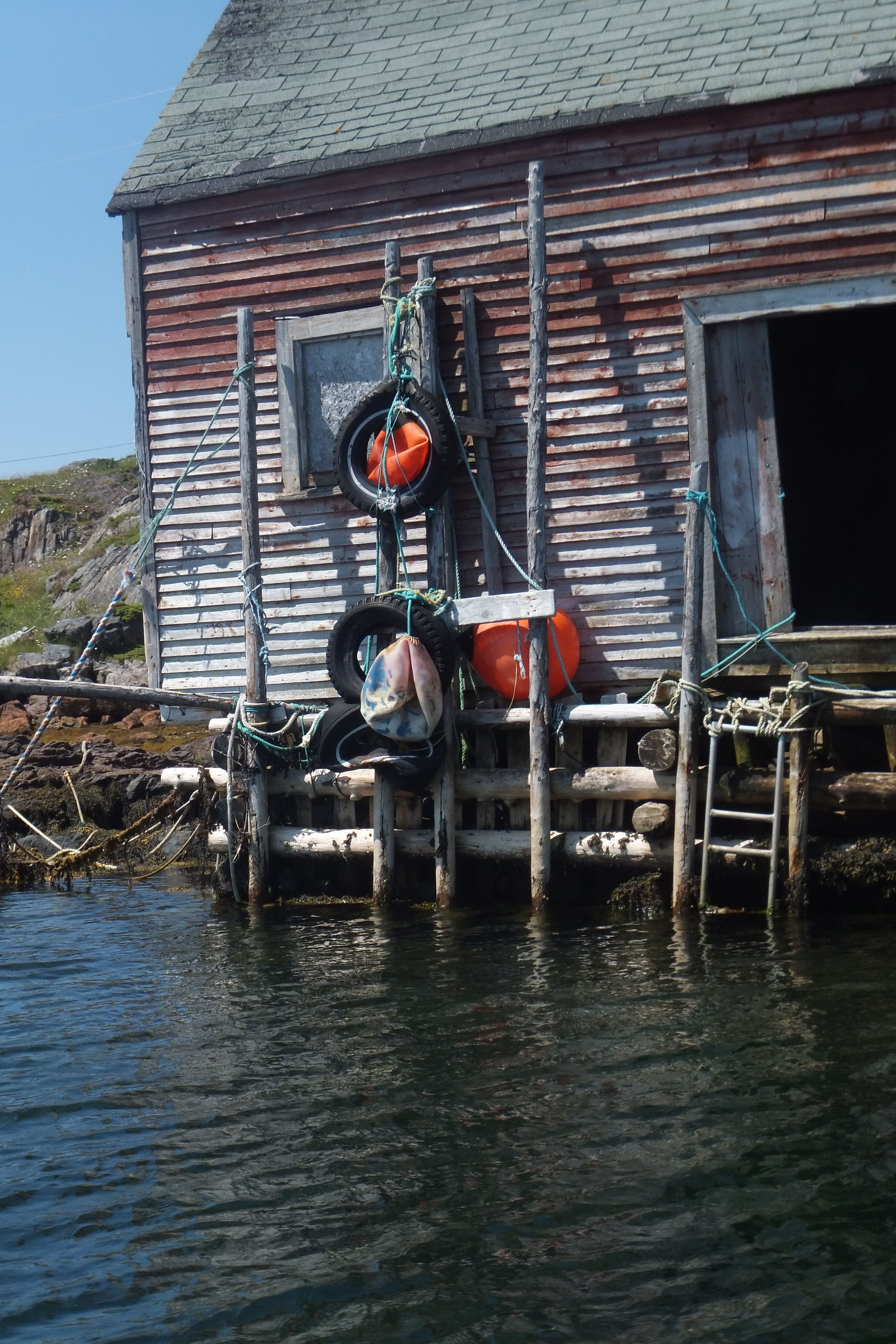 Old fishing stage, doors open, Herring Neck. | Newfoundland ...