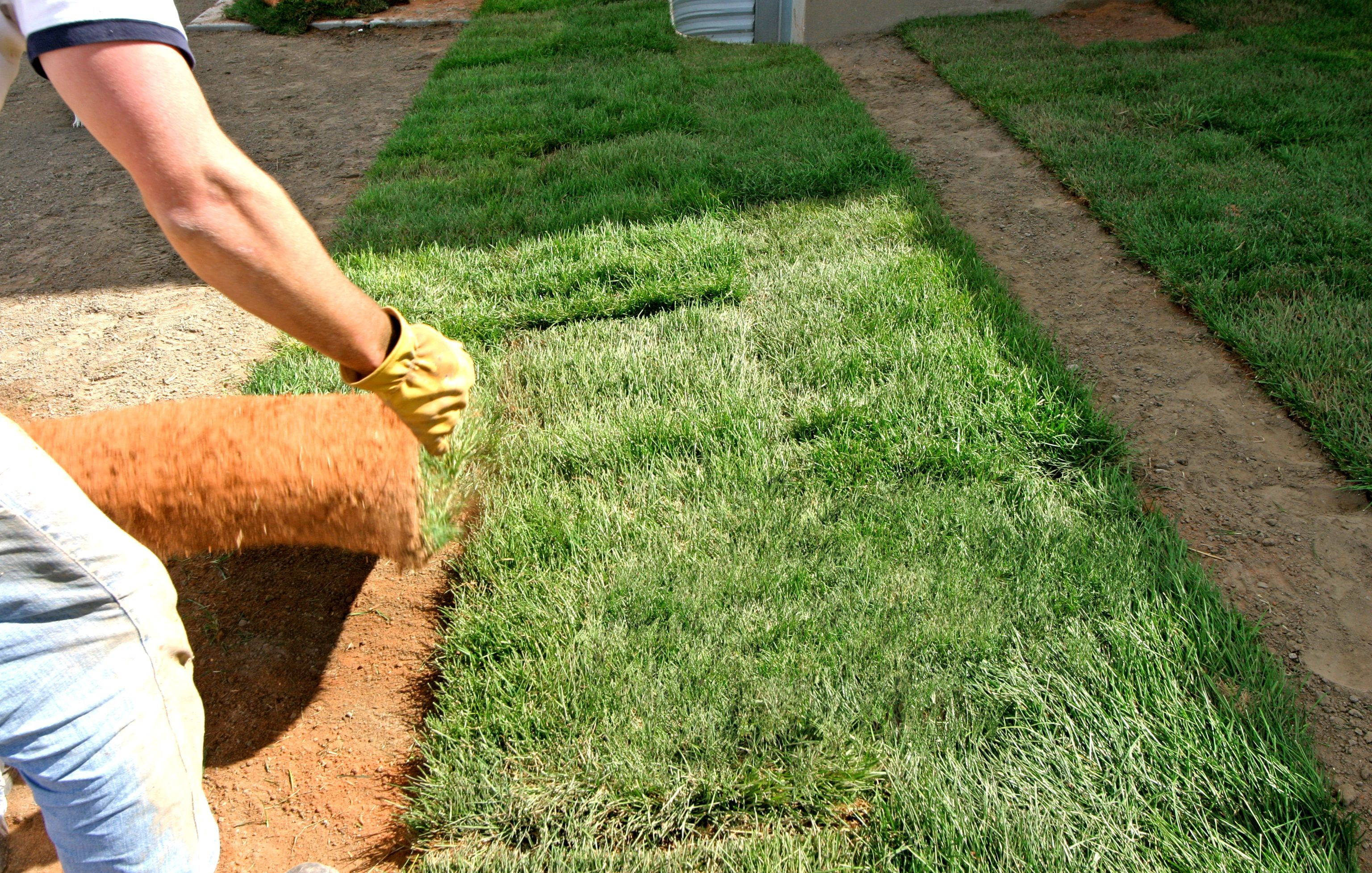 Remove the old lawn - Sod Source