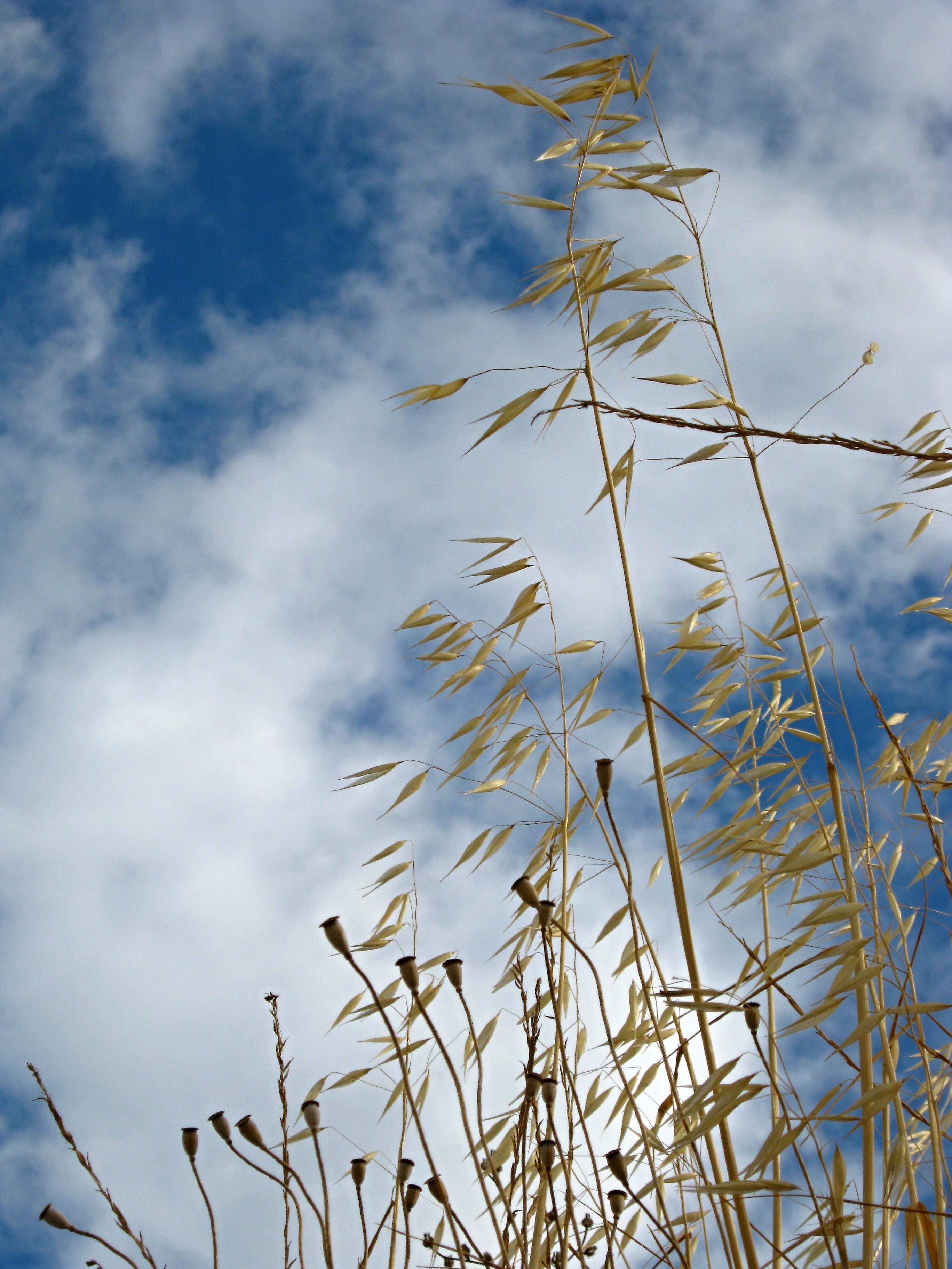 Old grass, Sky, Straw, Texture, Hay, HQ Photo