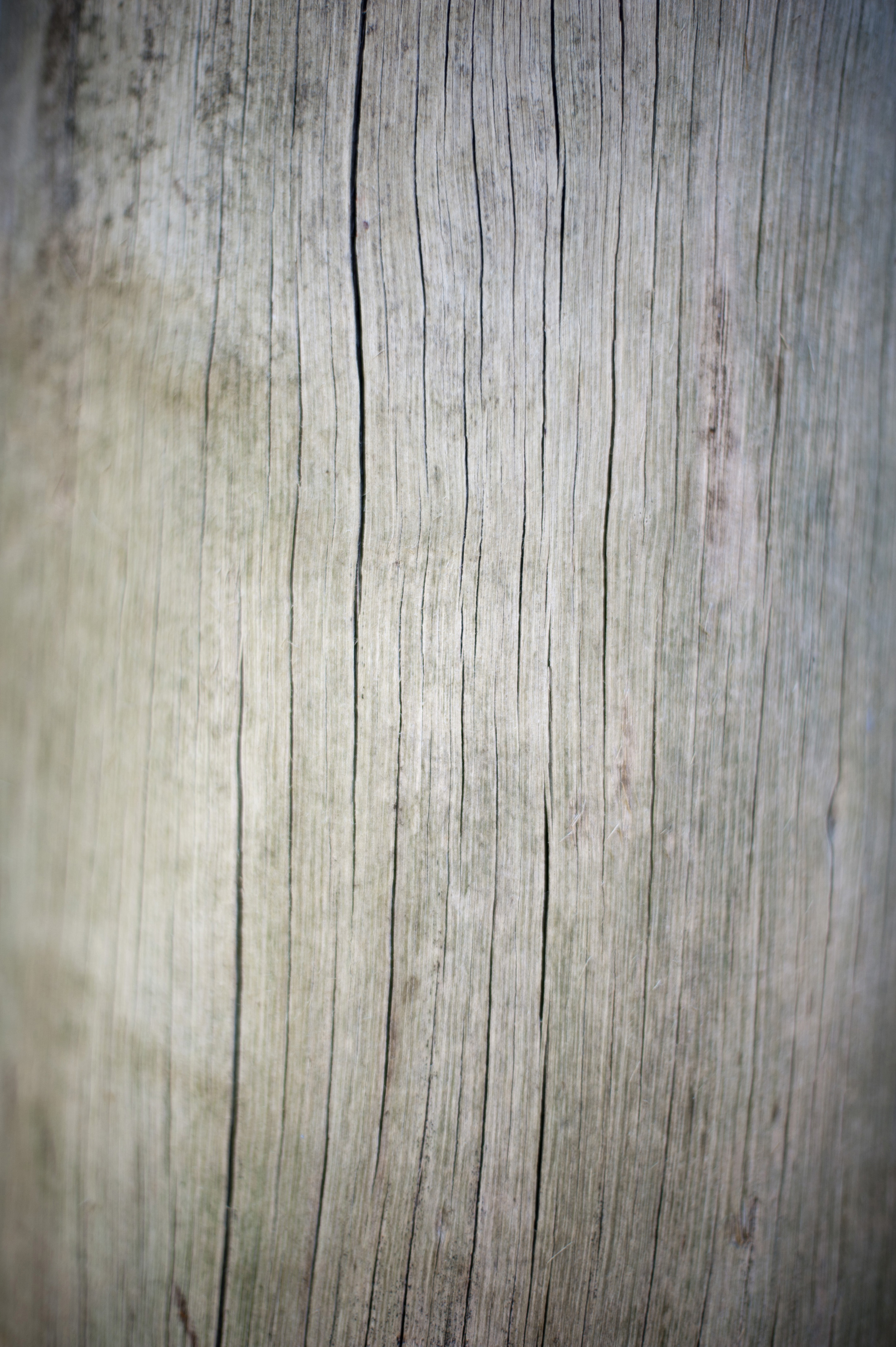 Old grunge wooden surface photo