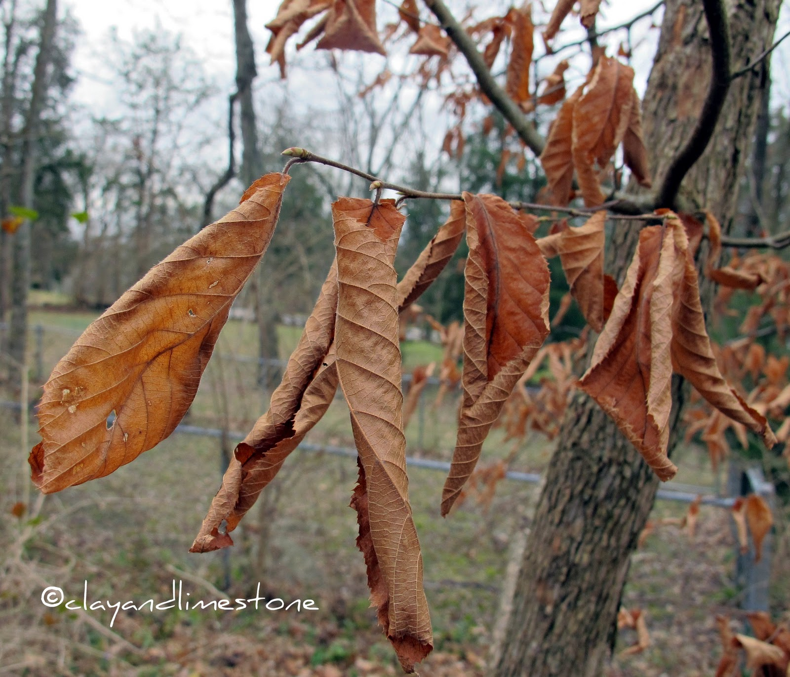 Old leaves photo