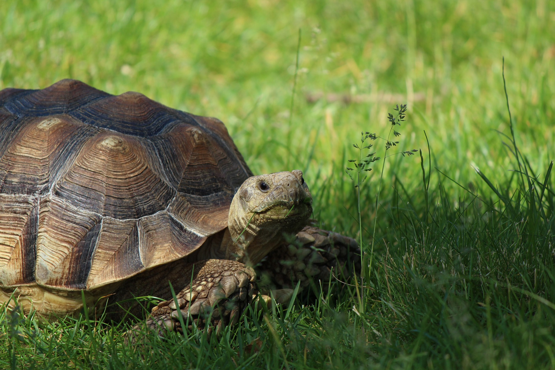 Old tortoise photo