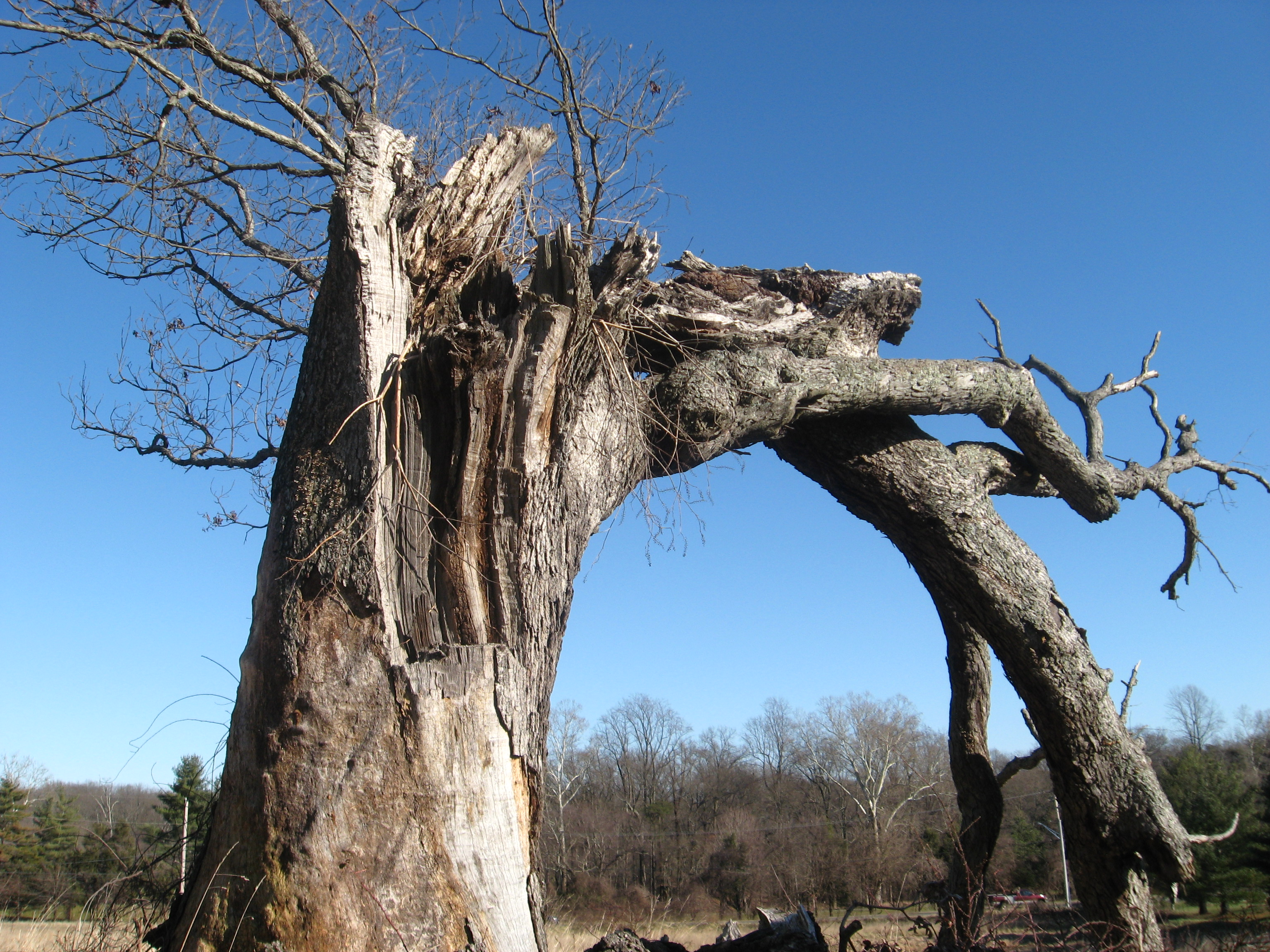 Old Tree – Trish+Brian