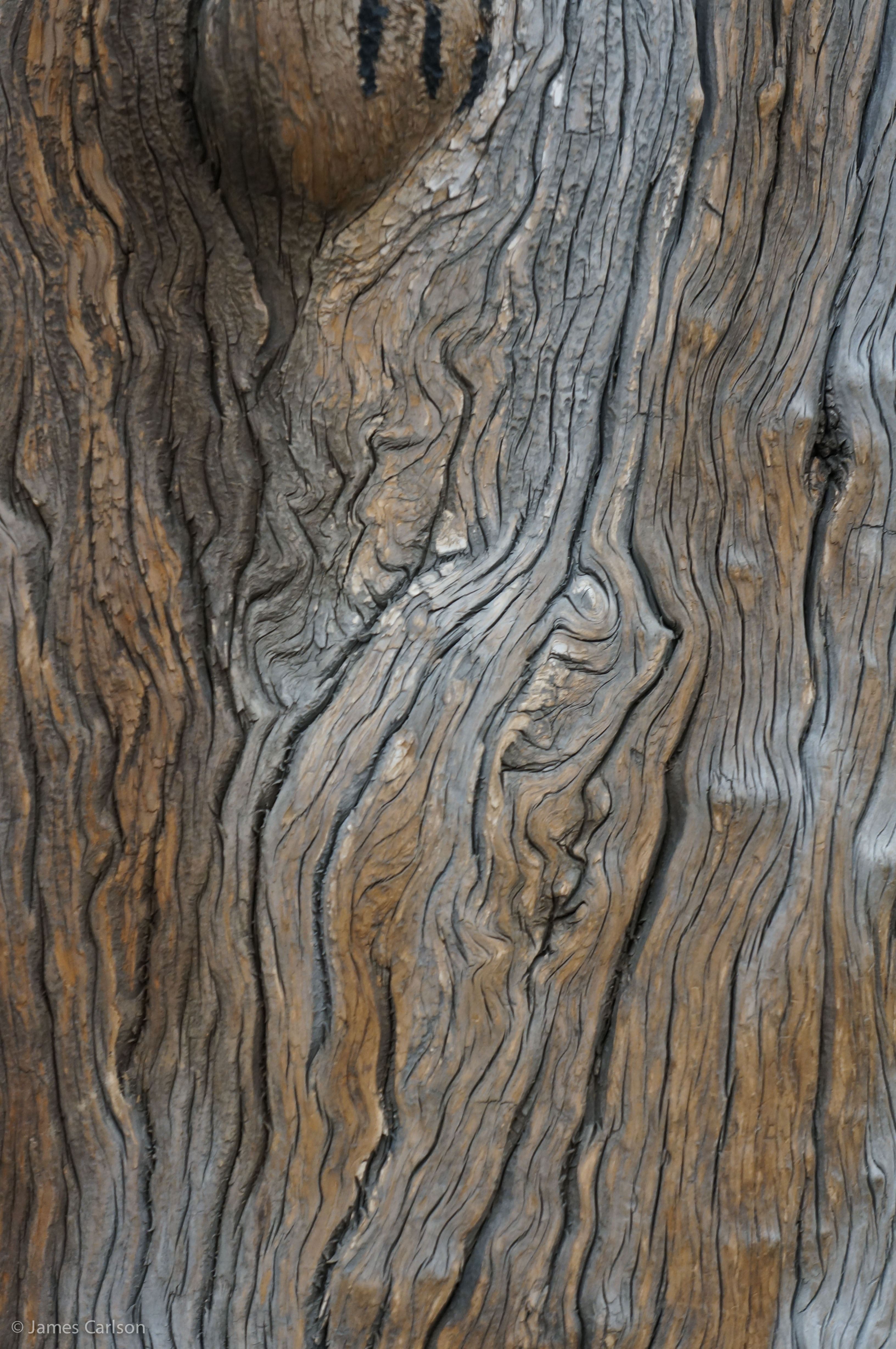 tree trunk | Circle and Square