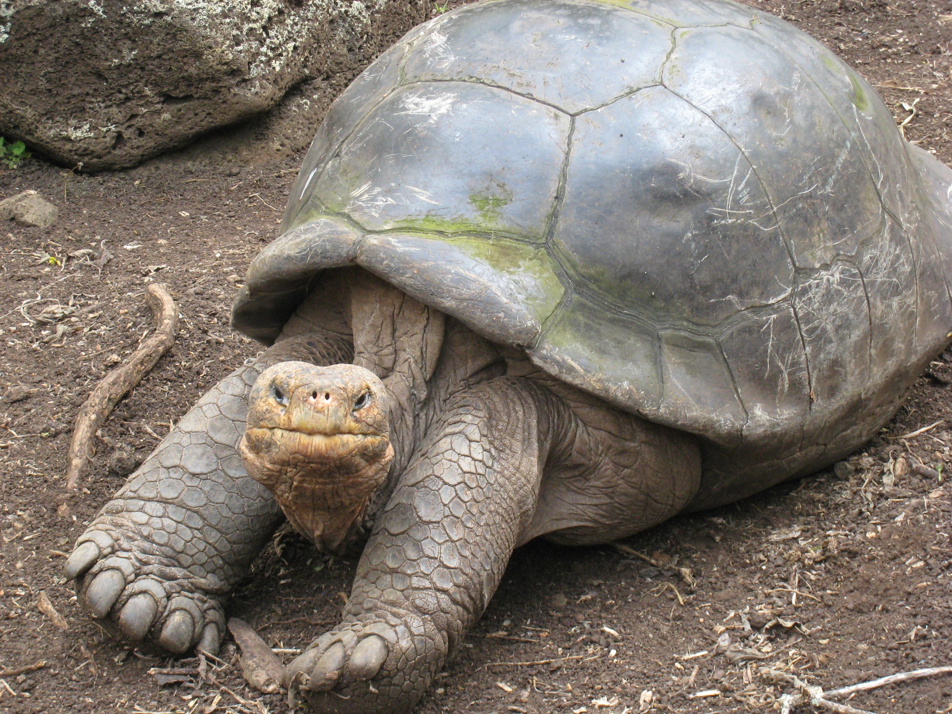 Old turtle photo