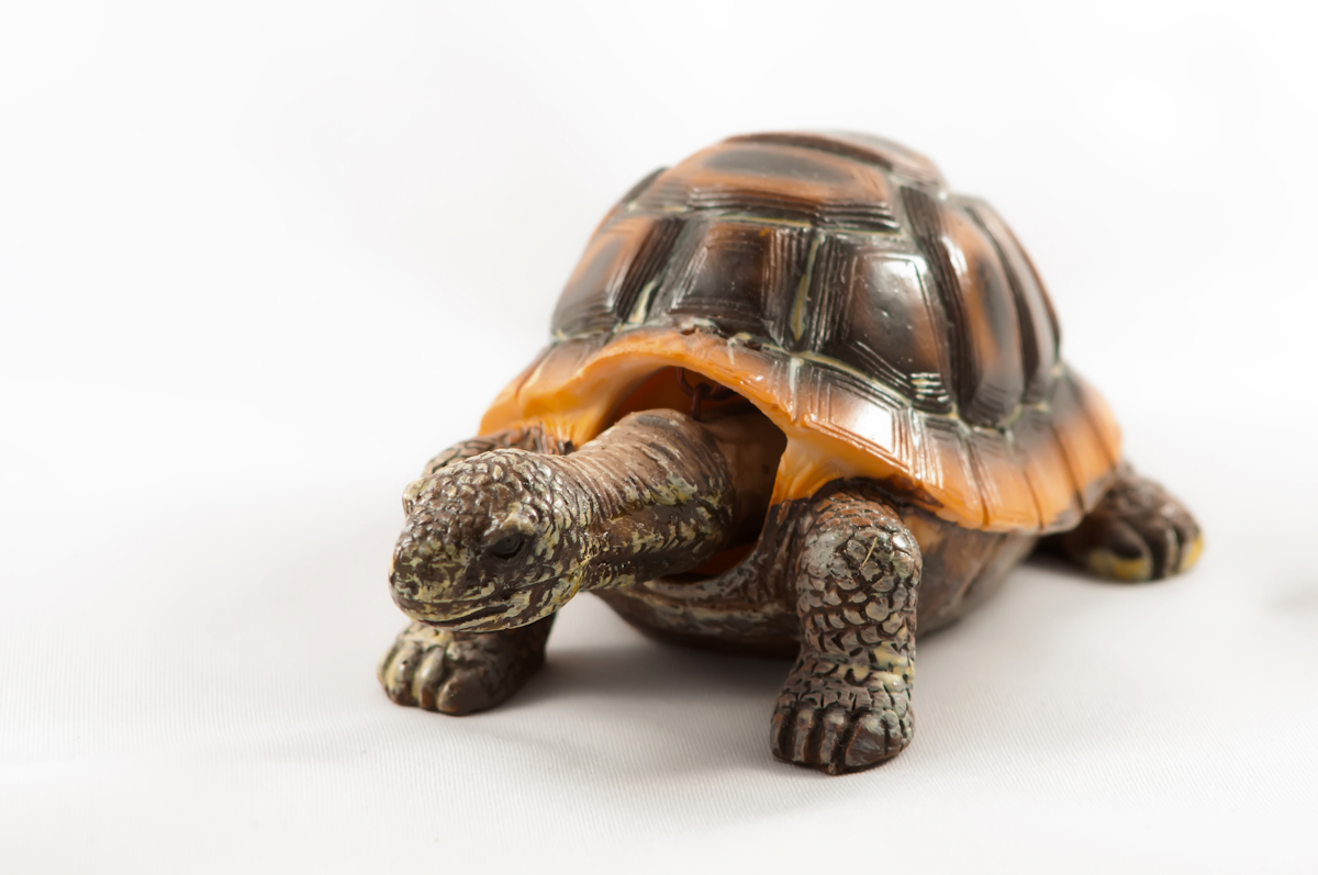 Old Turtle, Animal, Figure, Nature, Object, HQ Photo