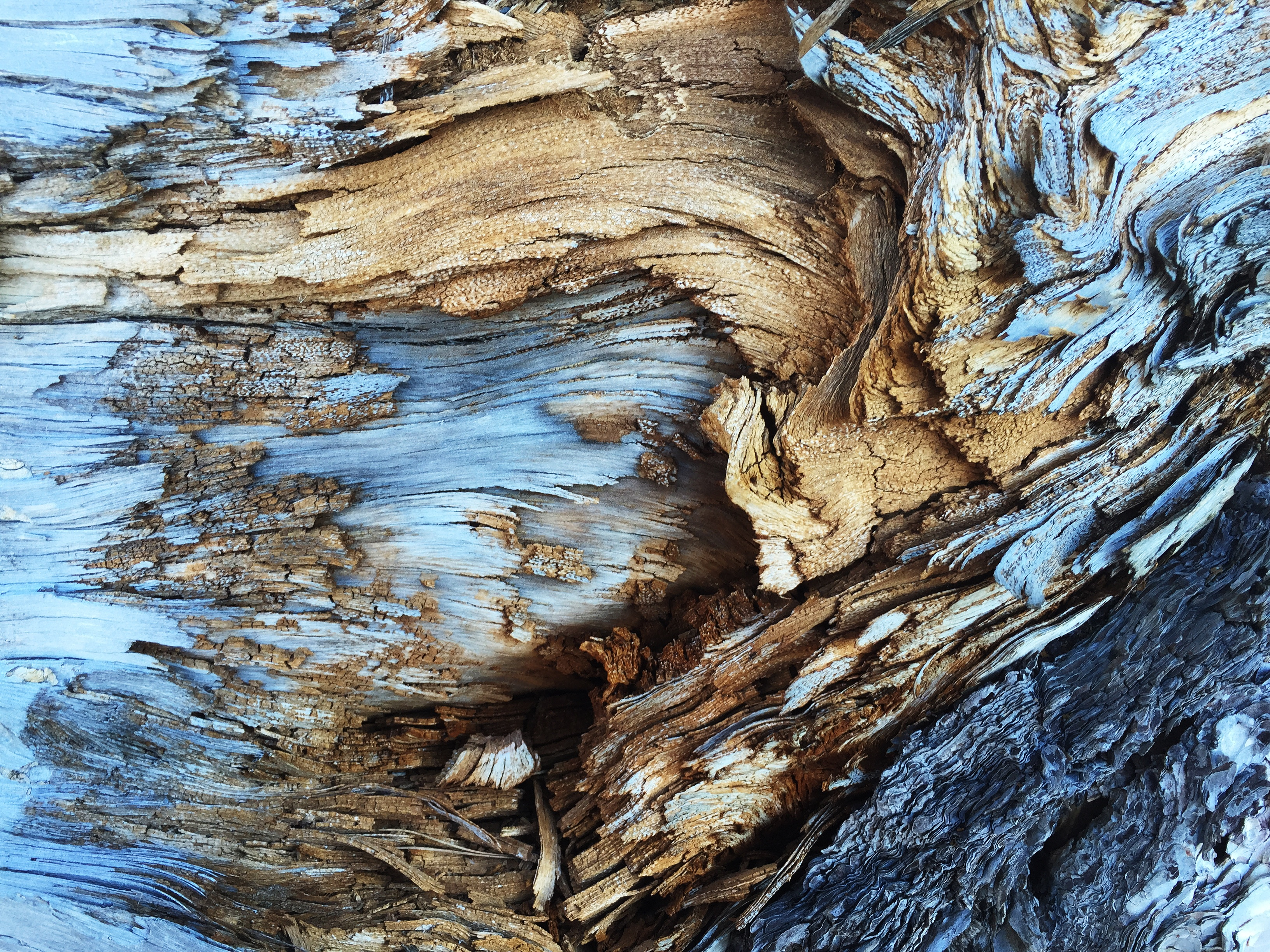 Old Wood, Wood, Wooden, Torn, Texture, HQ Photo