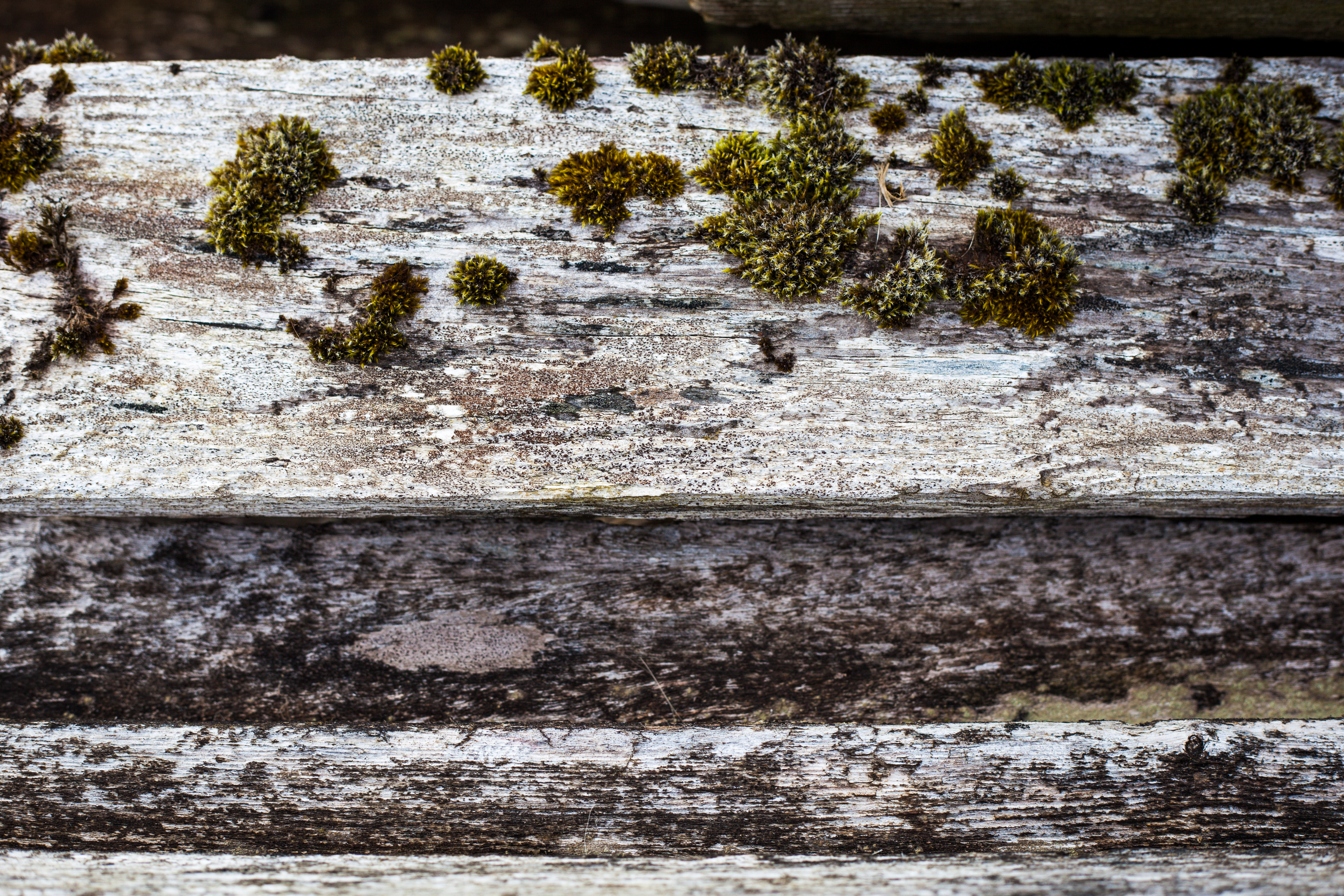 Old Wood with Moss, Aged, Grown, Molded, Moss, HQ Photo