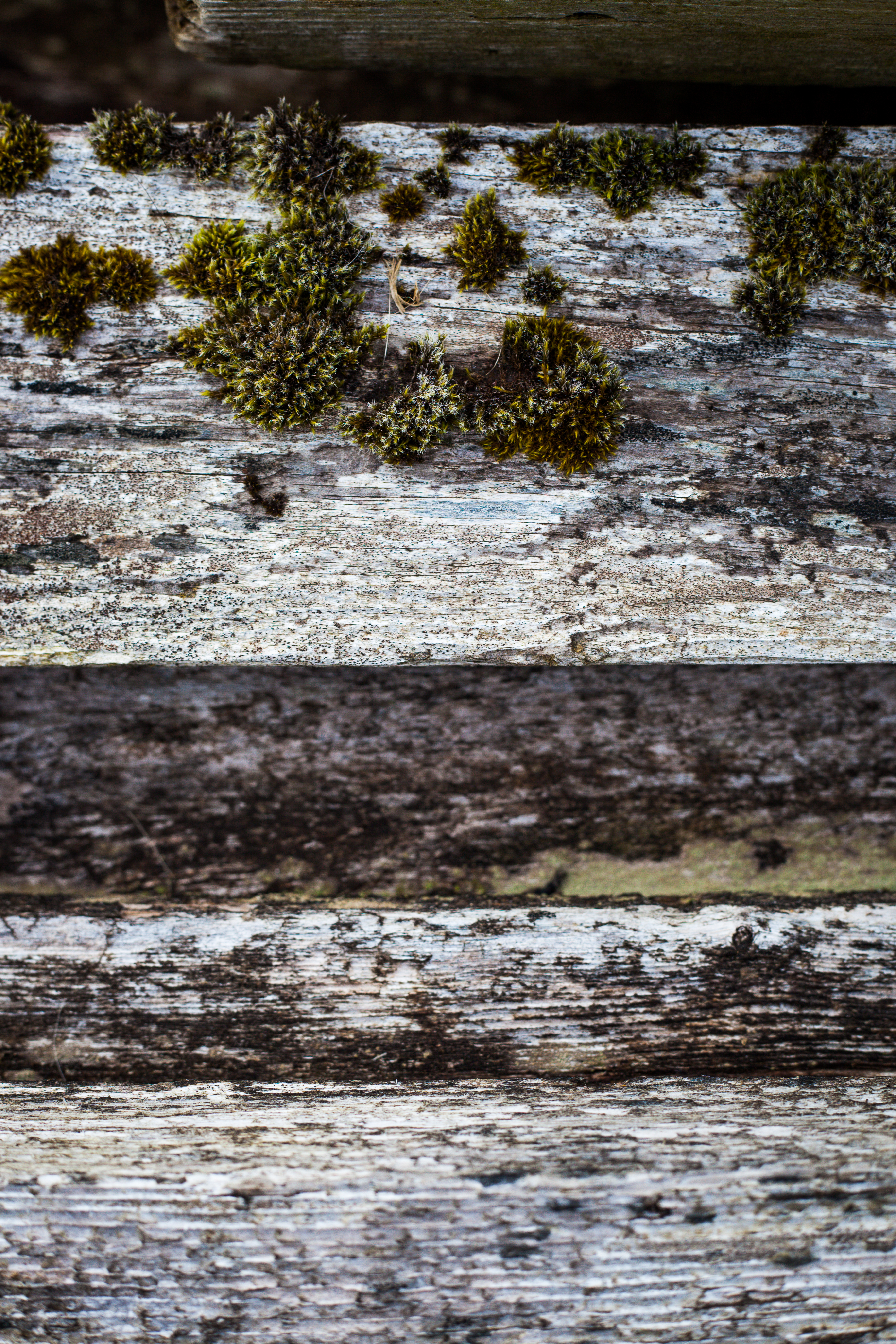 Old wooden fence texture photo