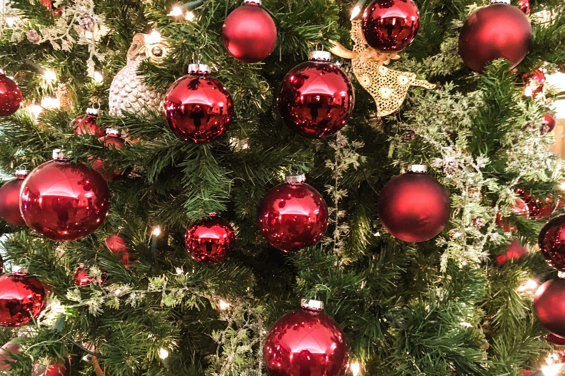 Free Stock Photo of Closeup of Red Ball Ornaments on Christmas Tree