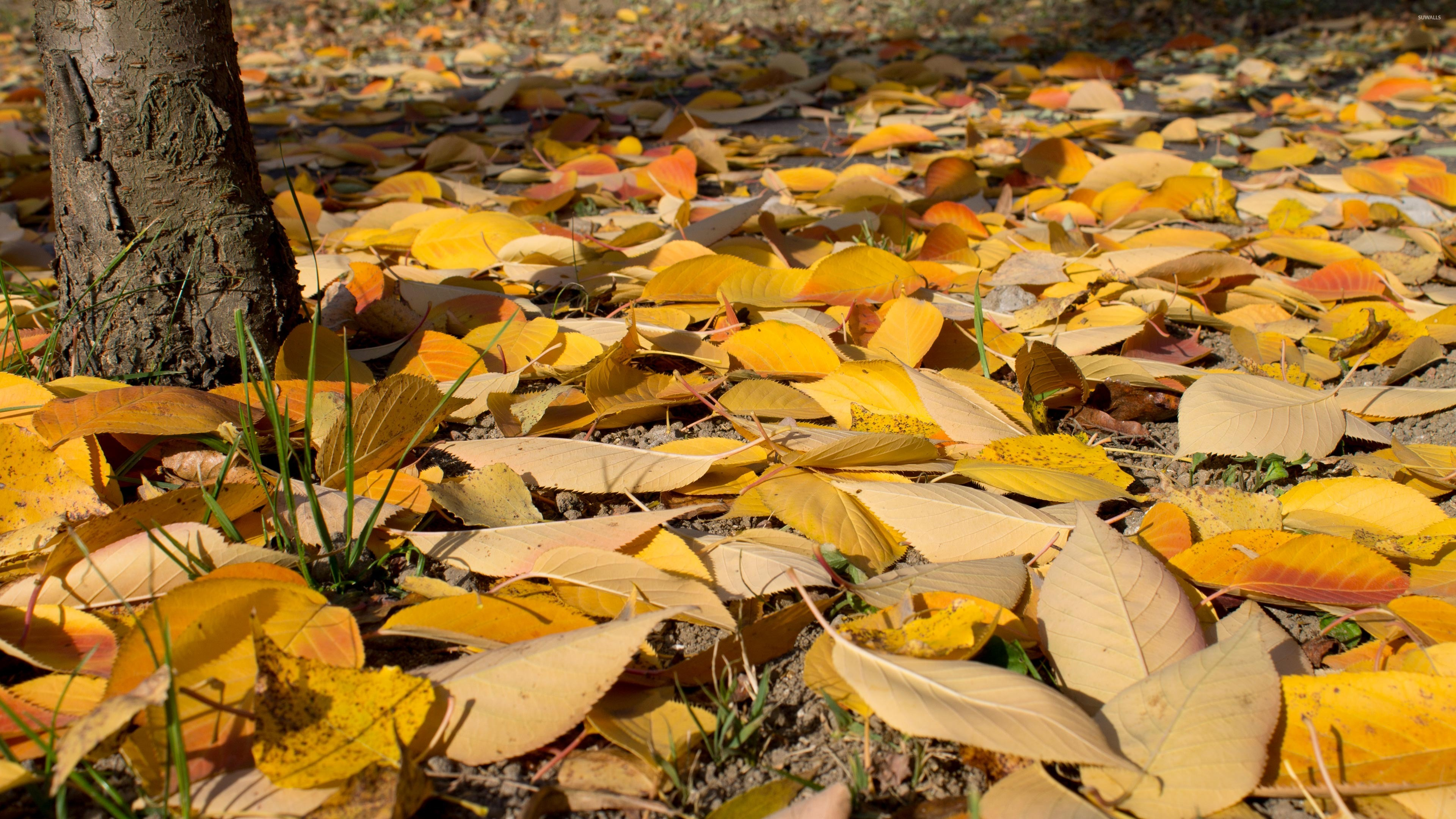 Yellow and orange leaves on the ground wallpaper - Nature wallpapers ...