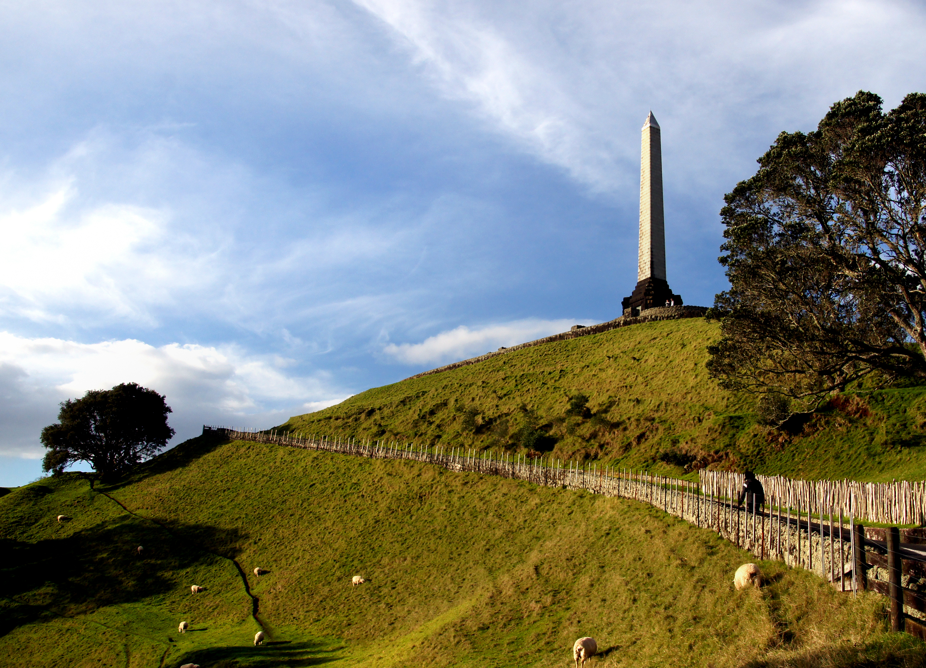 One tree hill auckland. photo