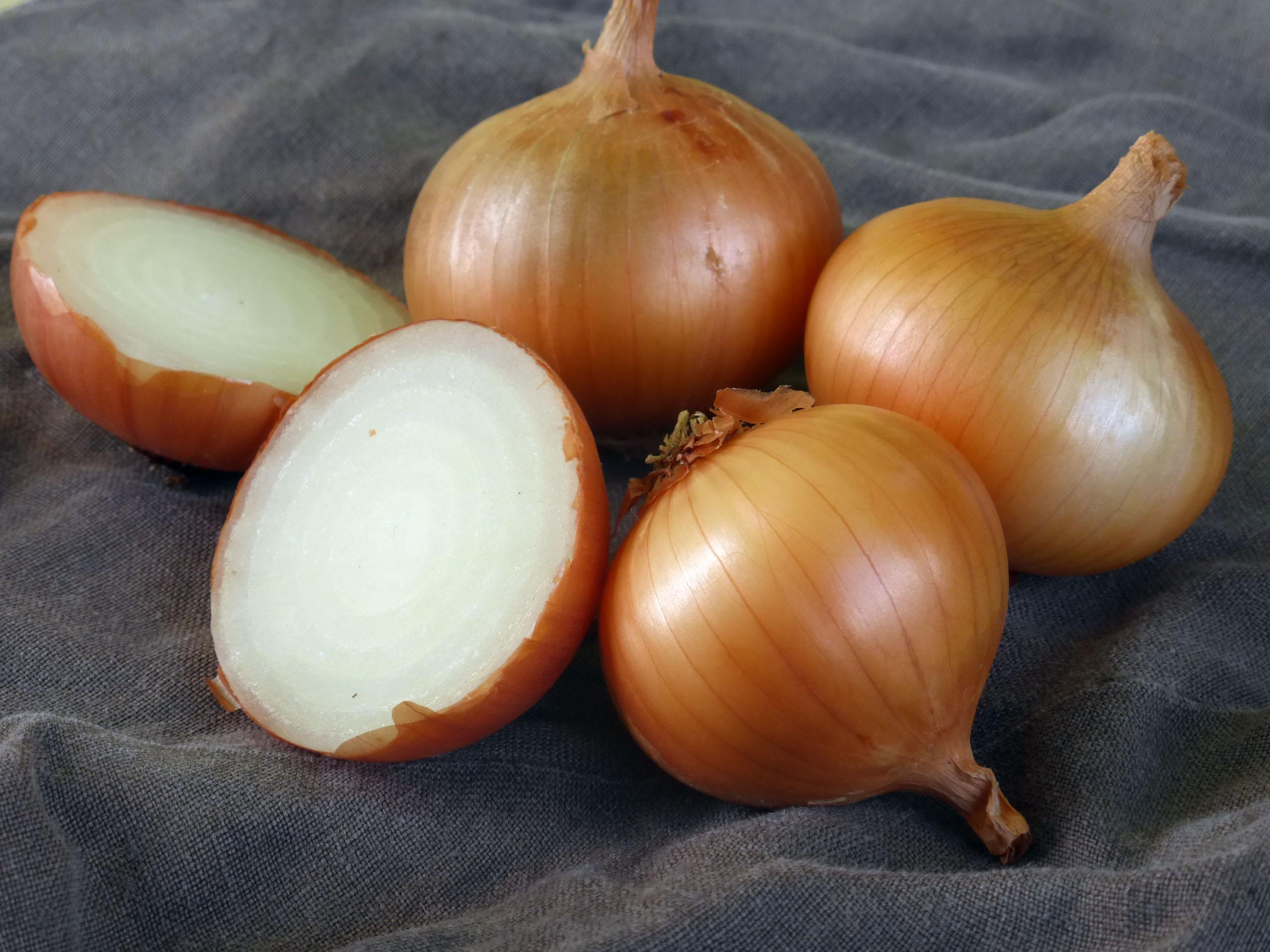 Walla Walla Sweet Dry Bulb Onion, 3 g : Southern Exposure Seed ...