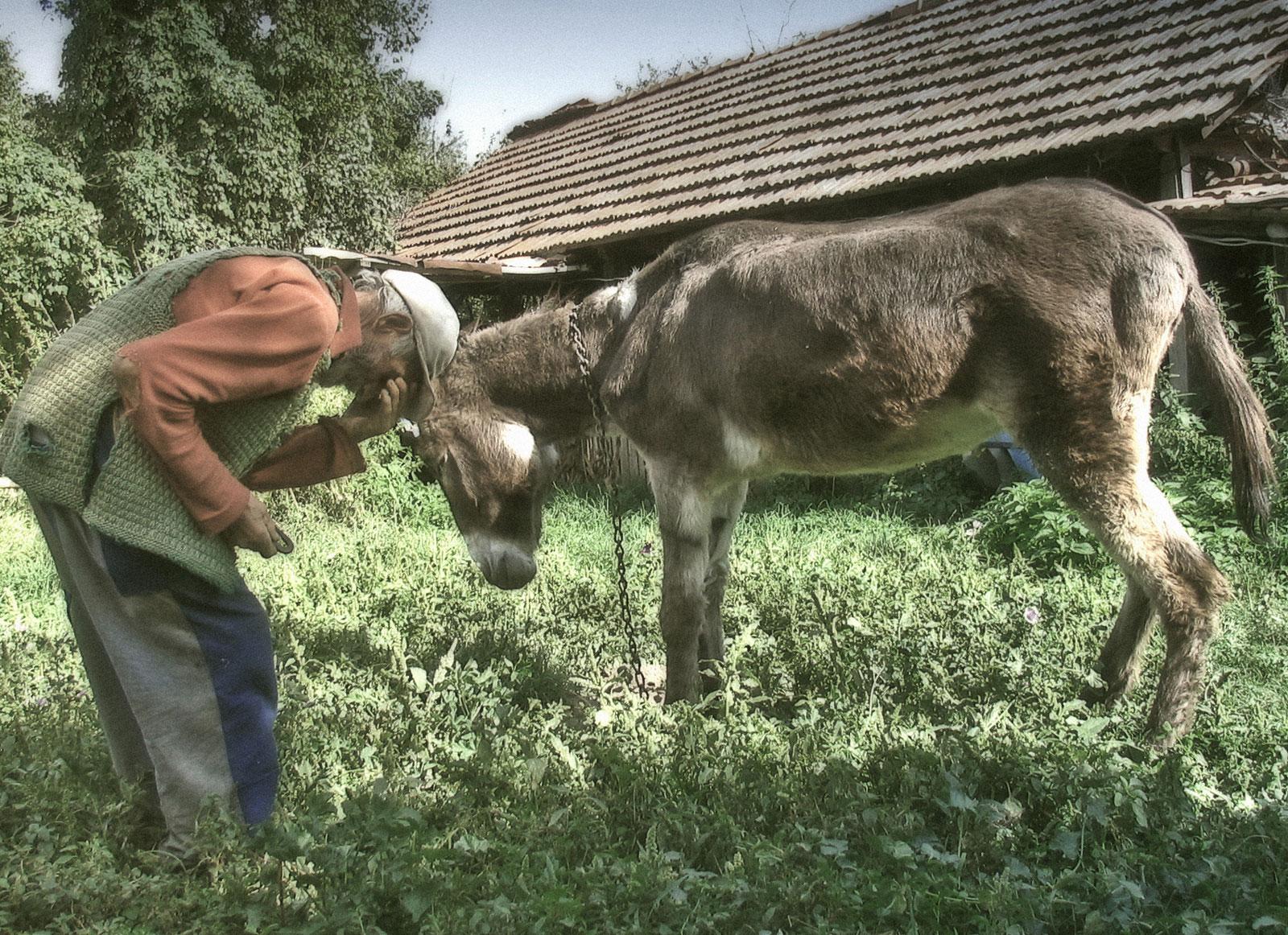 Only You, Animal, Bspo06, Donkey, Farm, HQ Photo