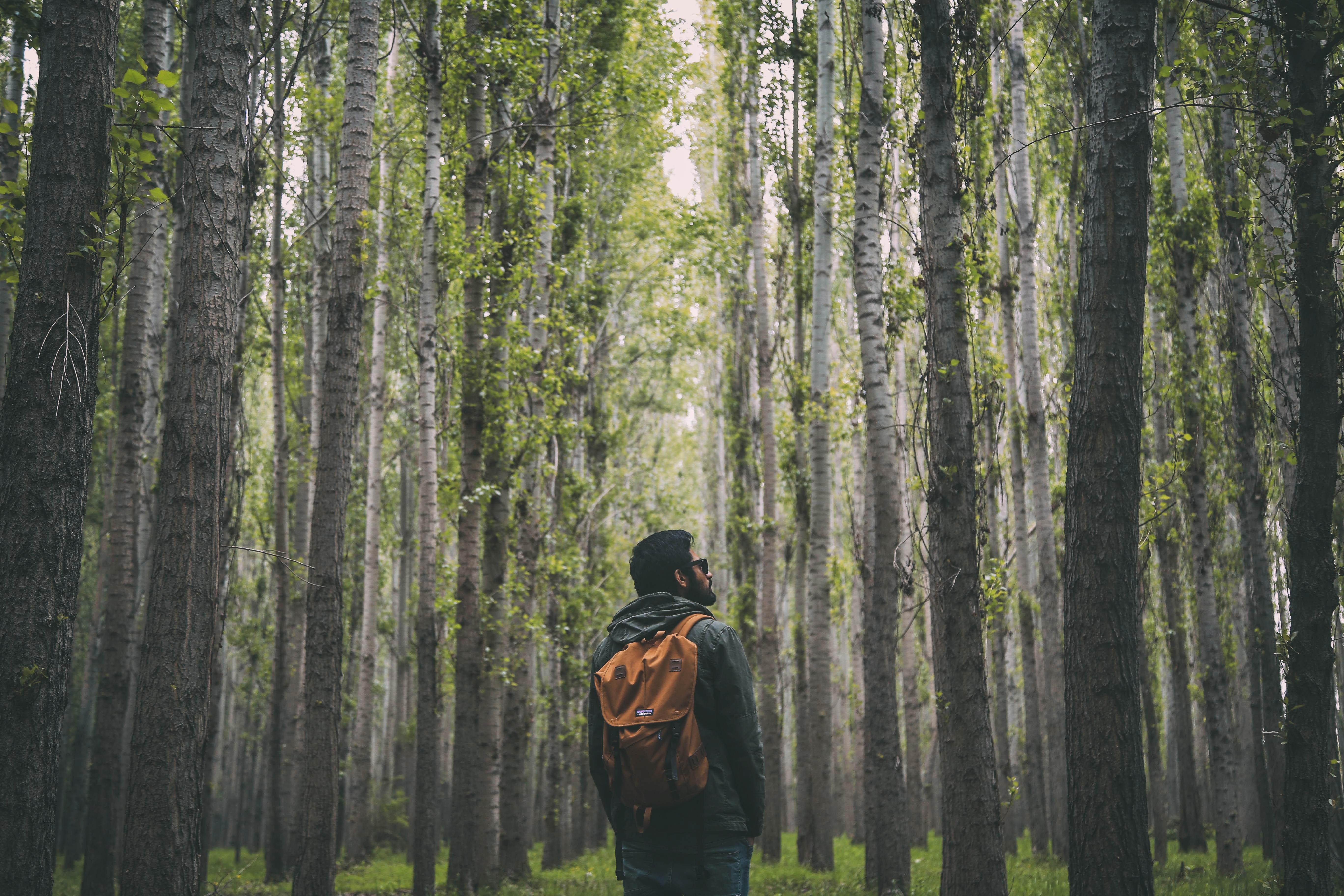 Orange Backpack, Adventure, Hiking, Trees, Sunglasses, HQ Photo