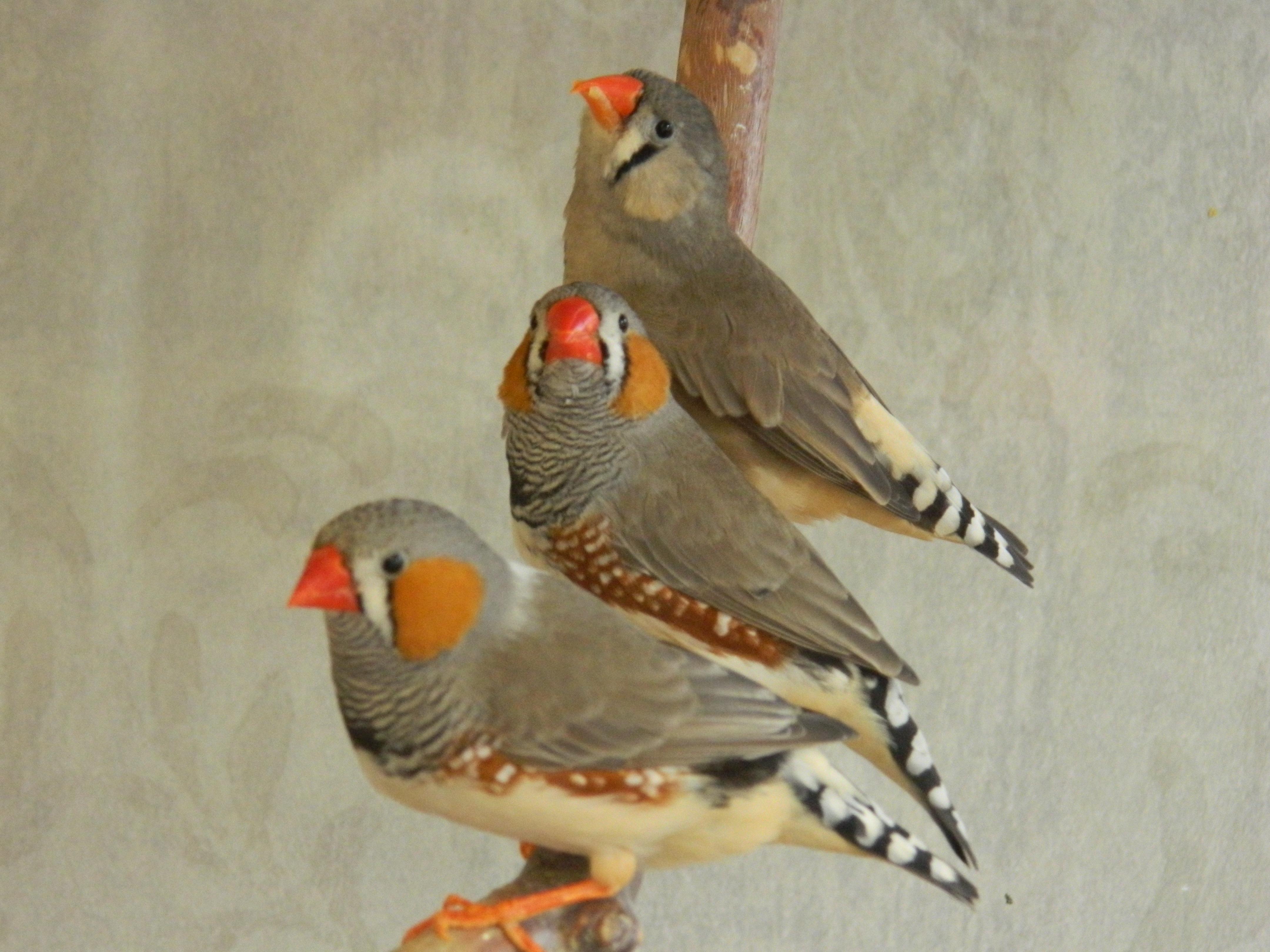 Orange beaked bird photo
