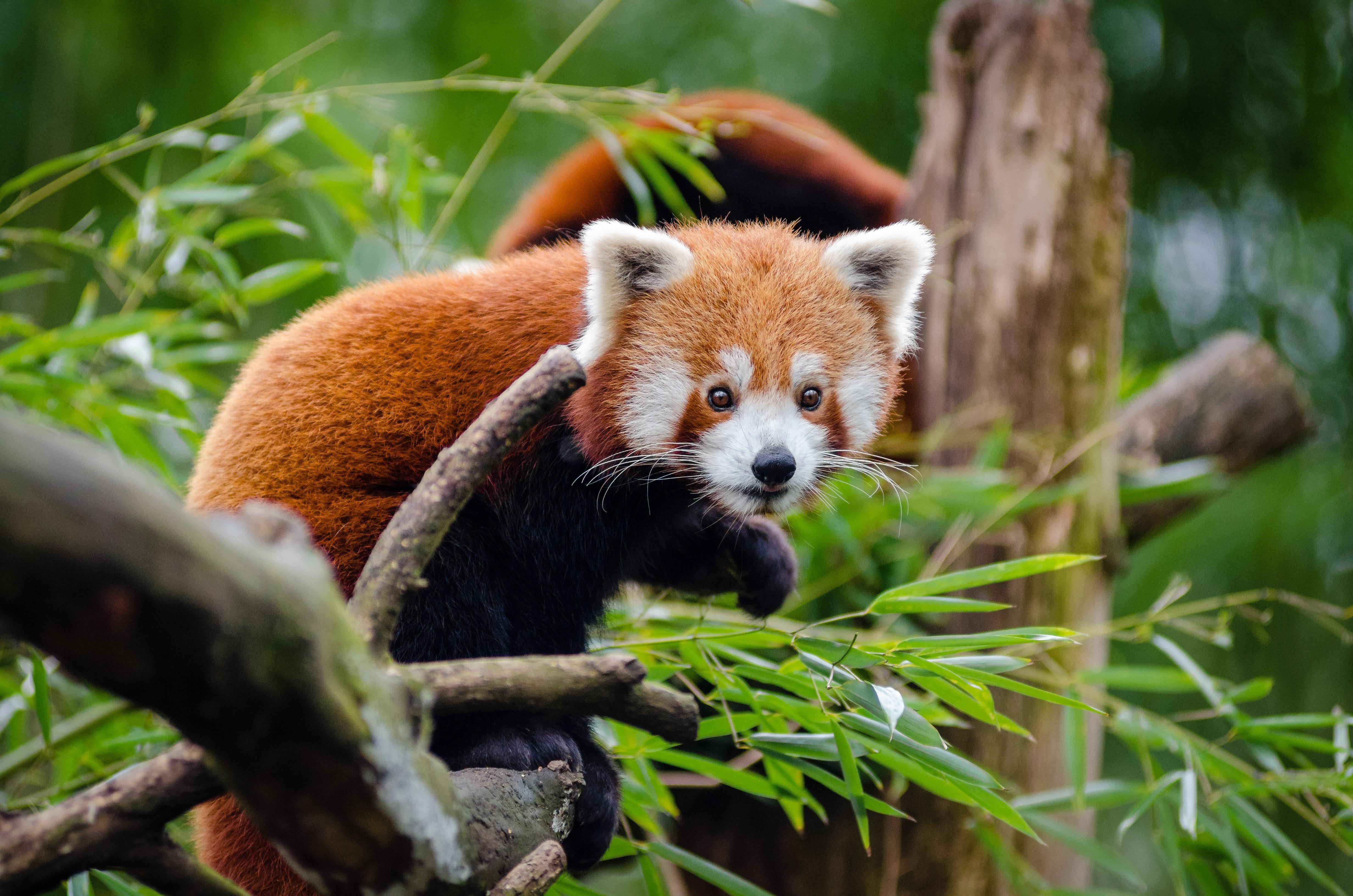 Orange black animal on tree branch photo