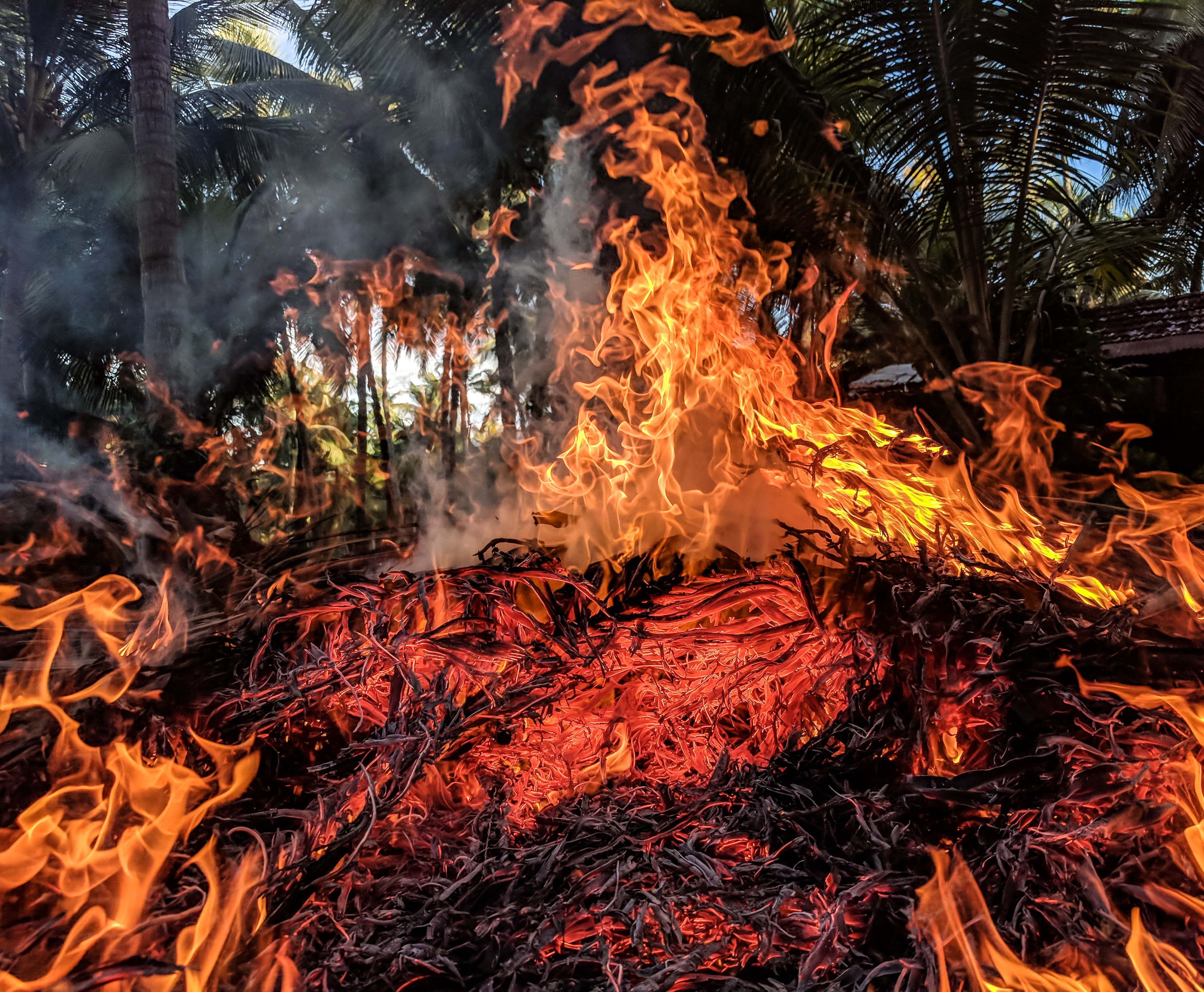 Orange Fire, Ash, Glowing, Wildfire, Warmly, HQ Photo