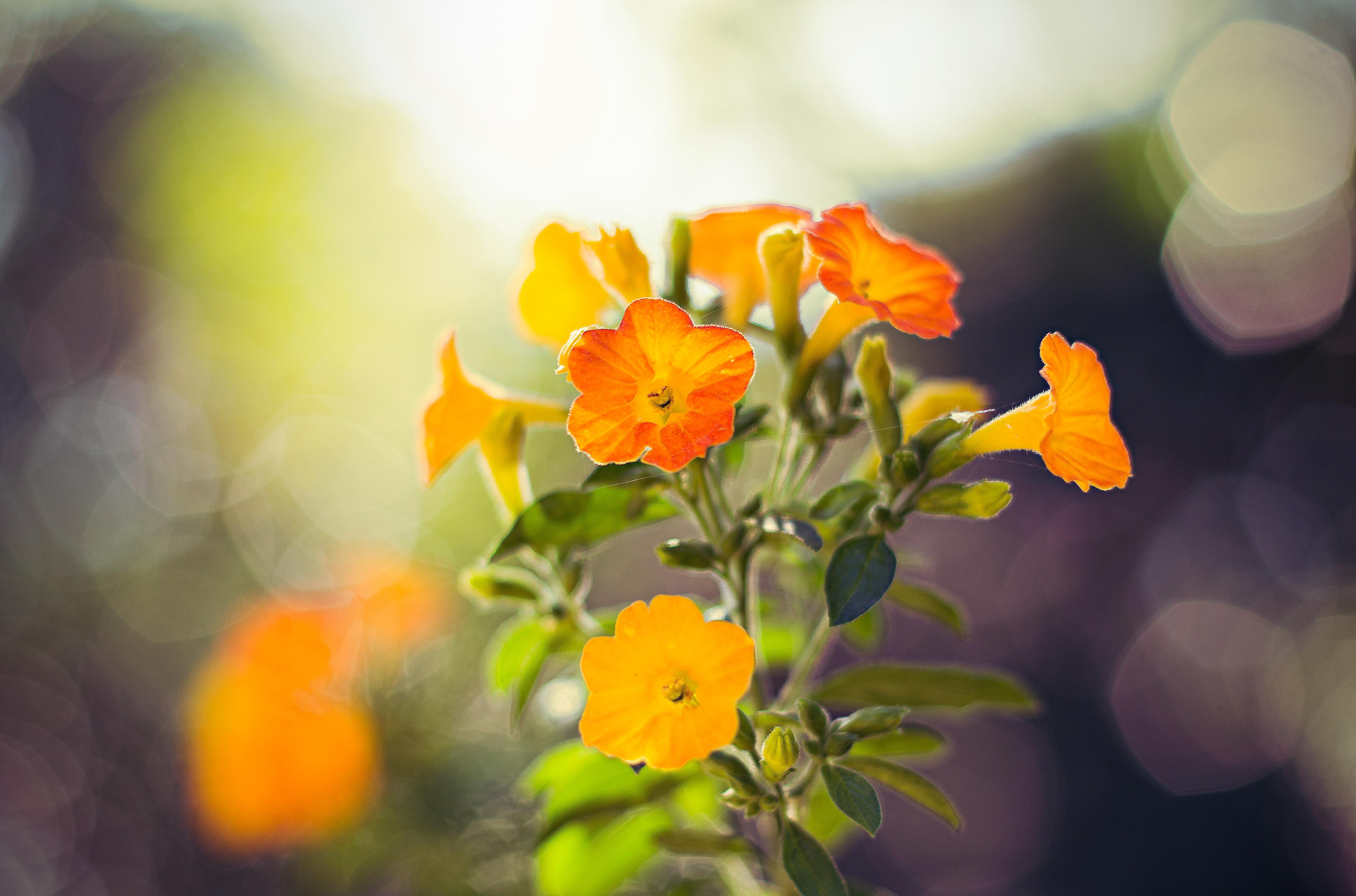 Free Photo Orange Flower Summer Yellow Orange Free Download